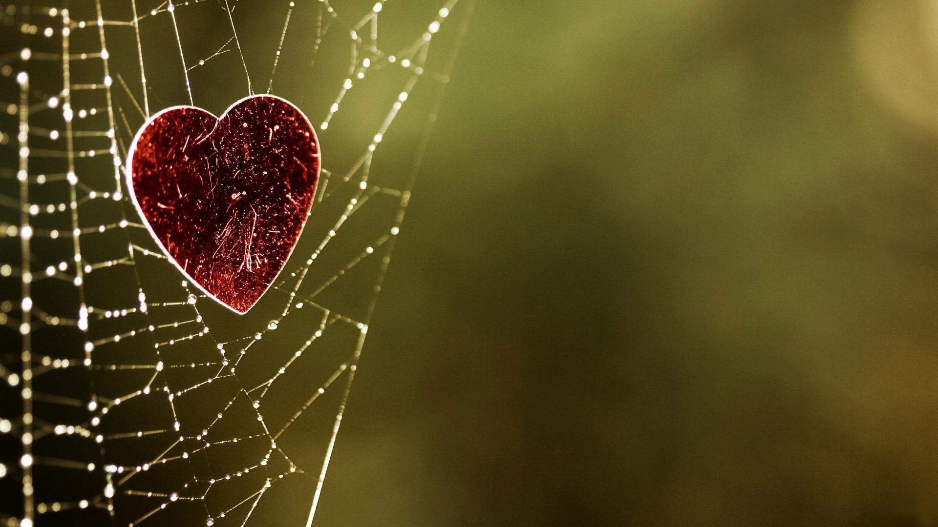 1920x1080 Heart Caught In A Spider Web HD Wallpaper