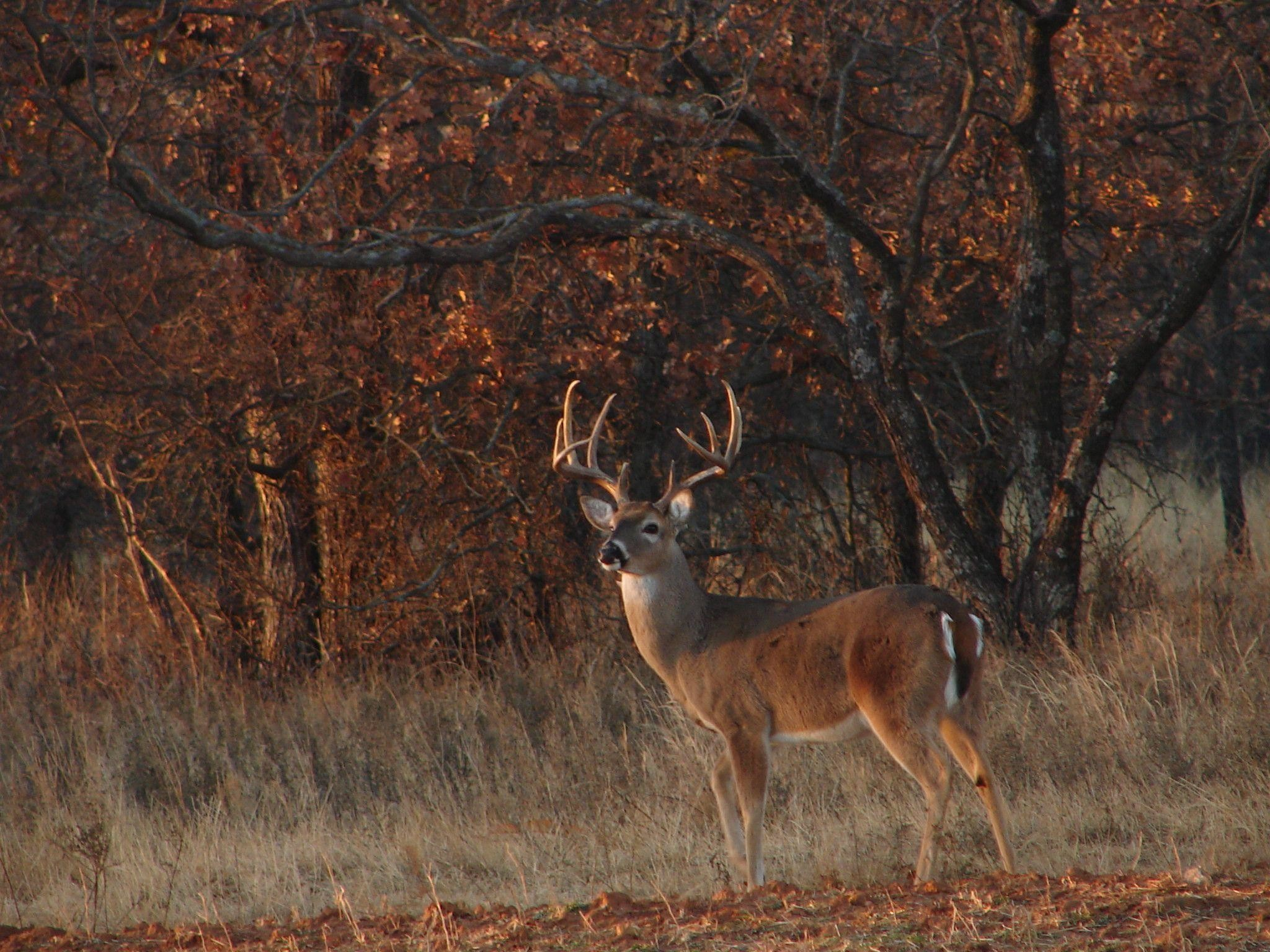 2048x1536 Download Whitetail Deer Hunting Forums Thread Cool Pics Age And ..