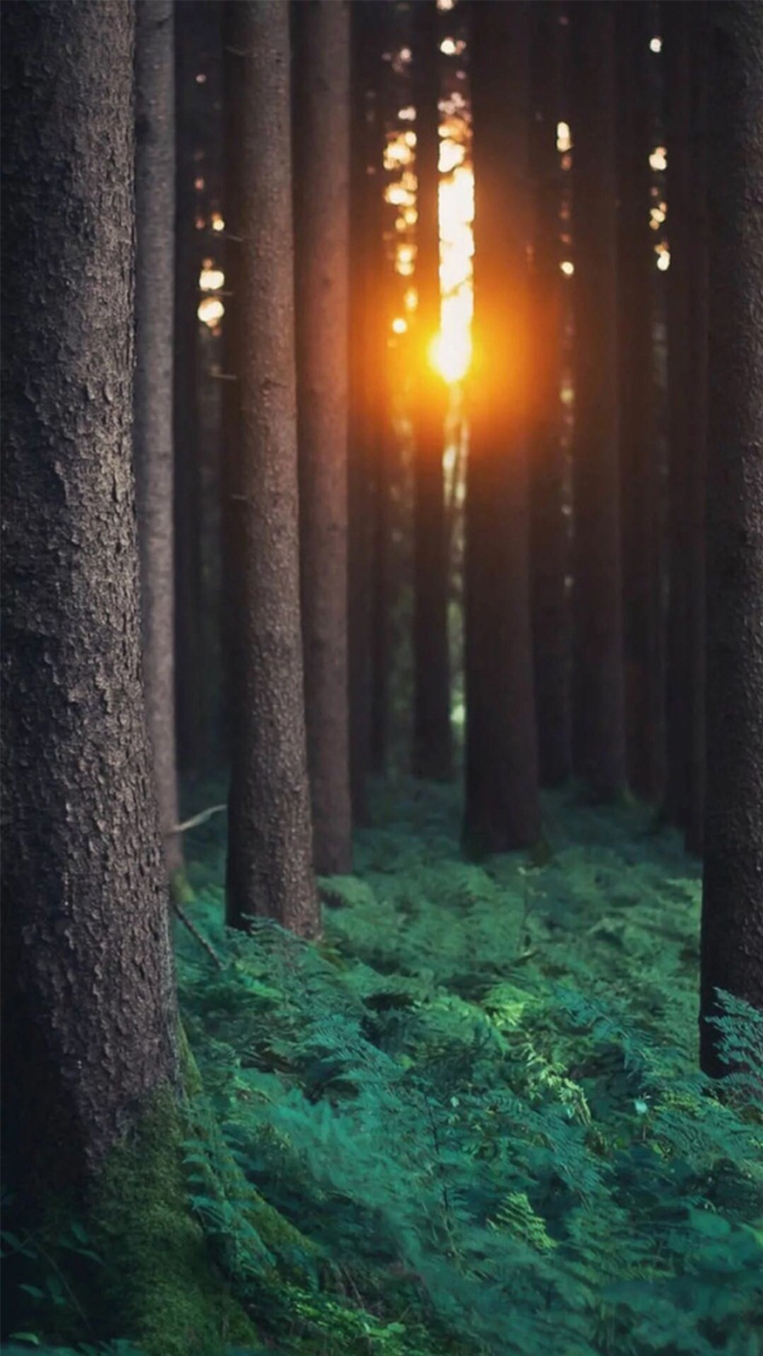 1080x1920 Morning Sunlight Through Forest Trees #iPhone #6 #wallpaper