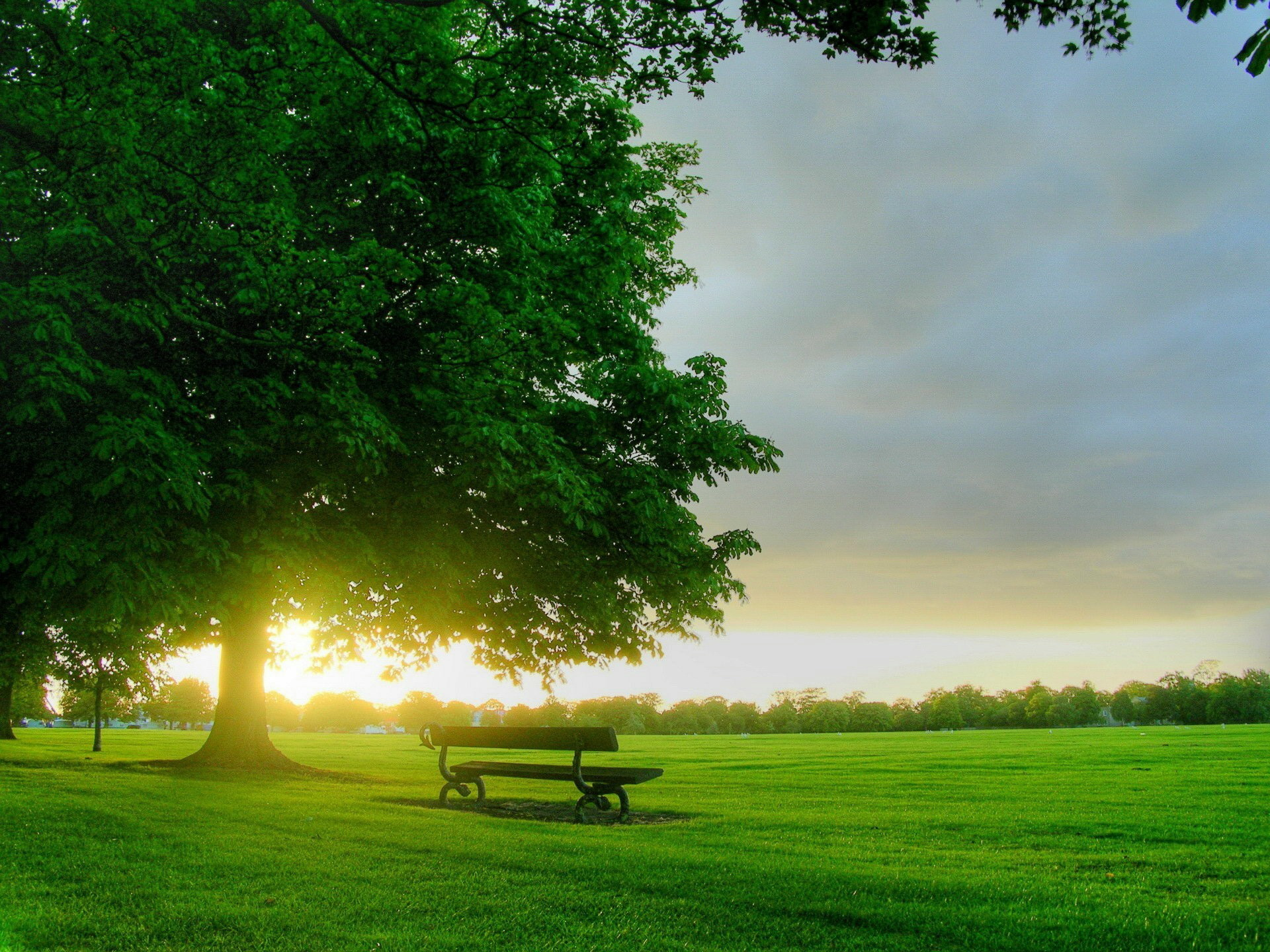 green scenery images hd