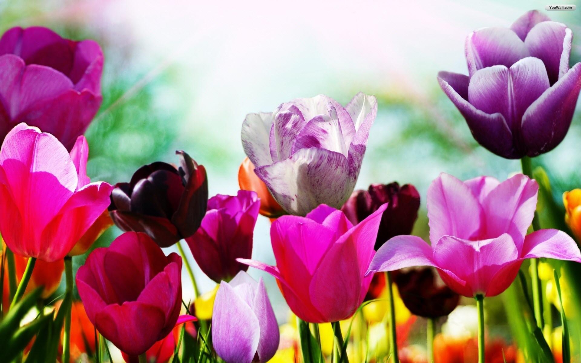 Spring Screensavers Free Downloads
