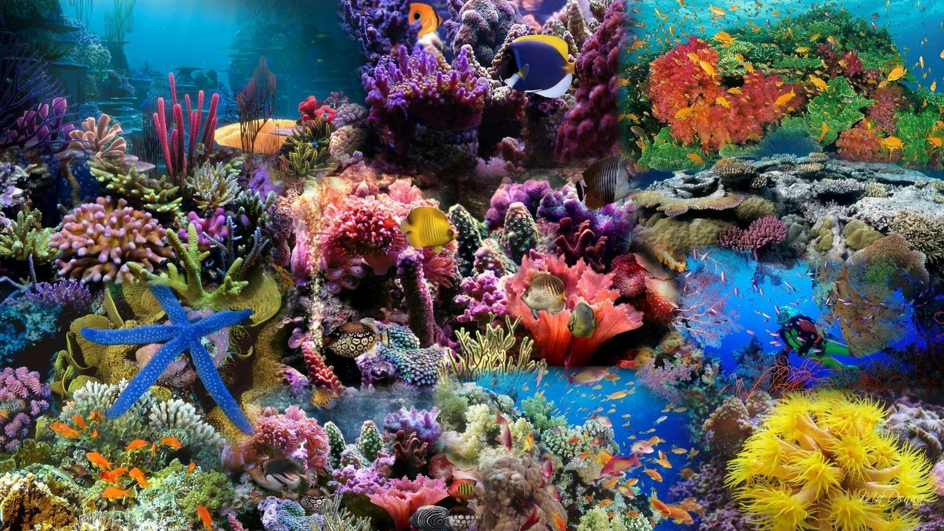 1920x1080 Wallpapers For > Coral Reef Wallpaper