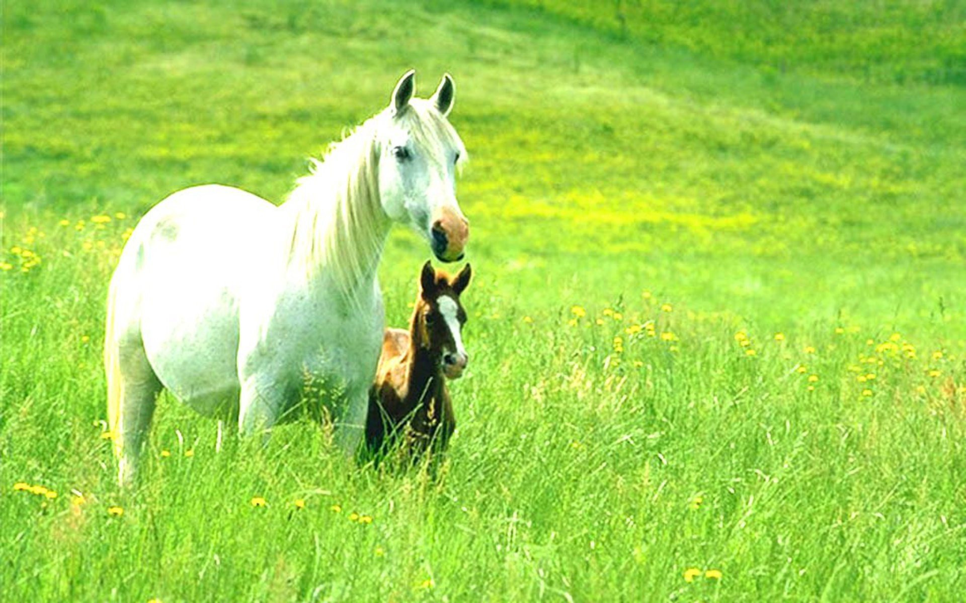 1920x1200 Animals. Horses and Ponies Wallpaper