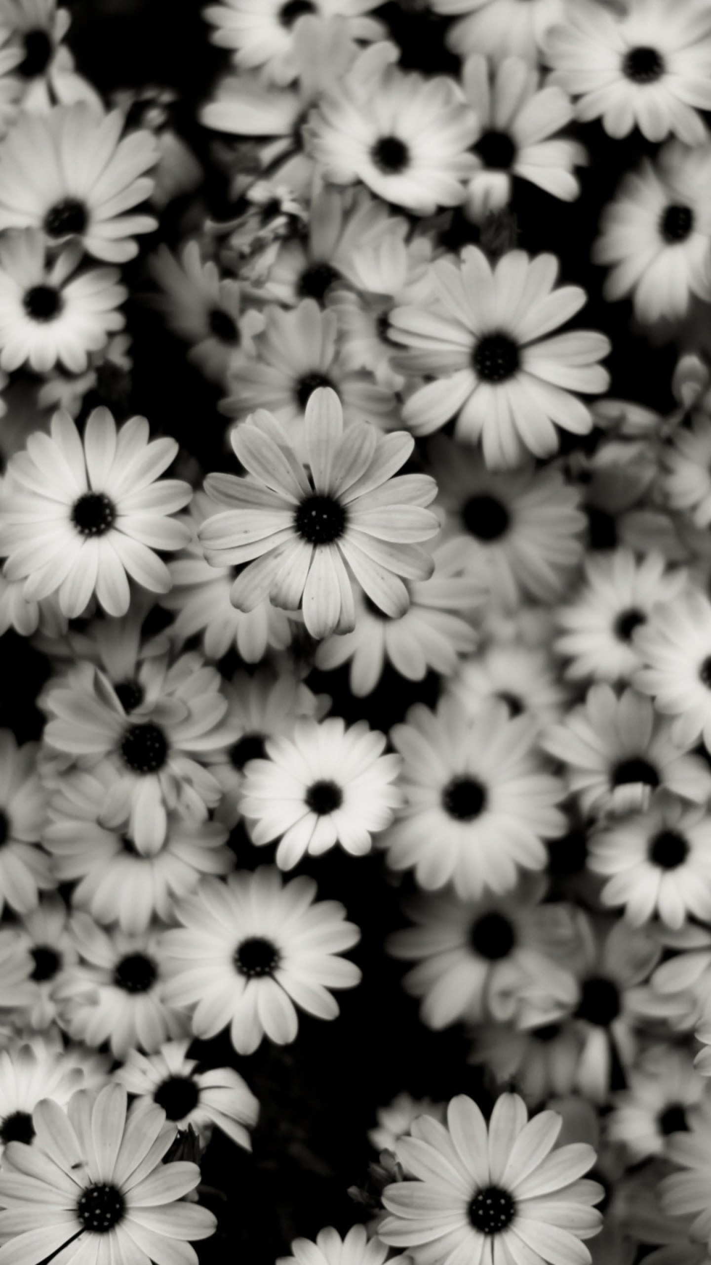 Black and White Roses Wallpaper (56+ images)