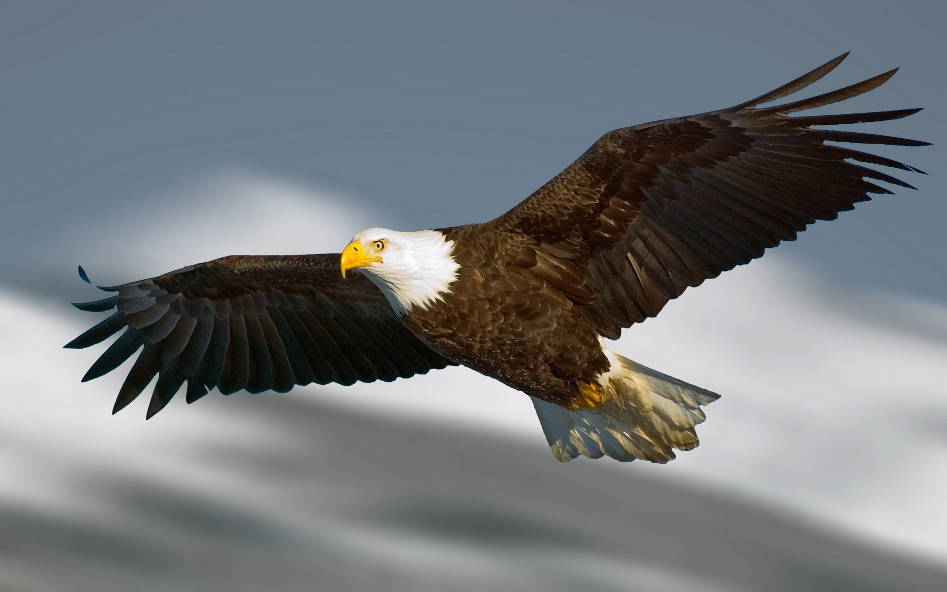 1920x1200 Eagle Wallpaper 42007
