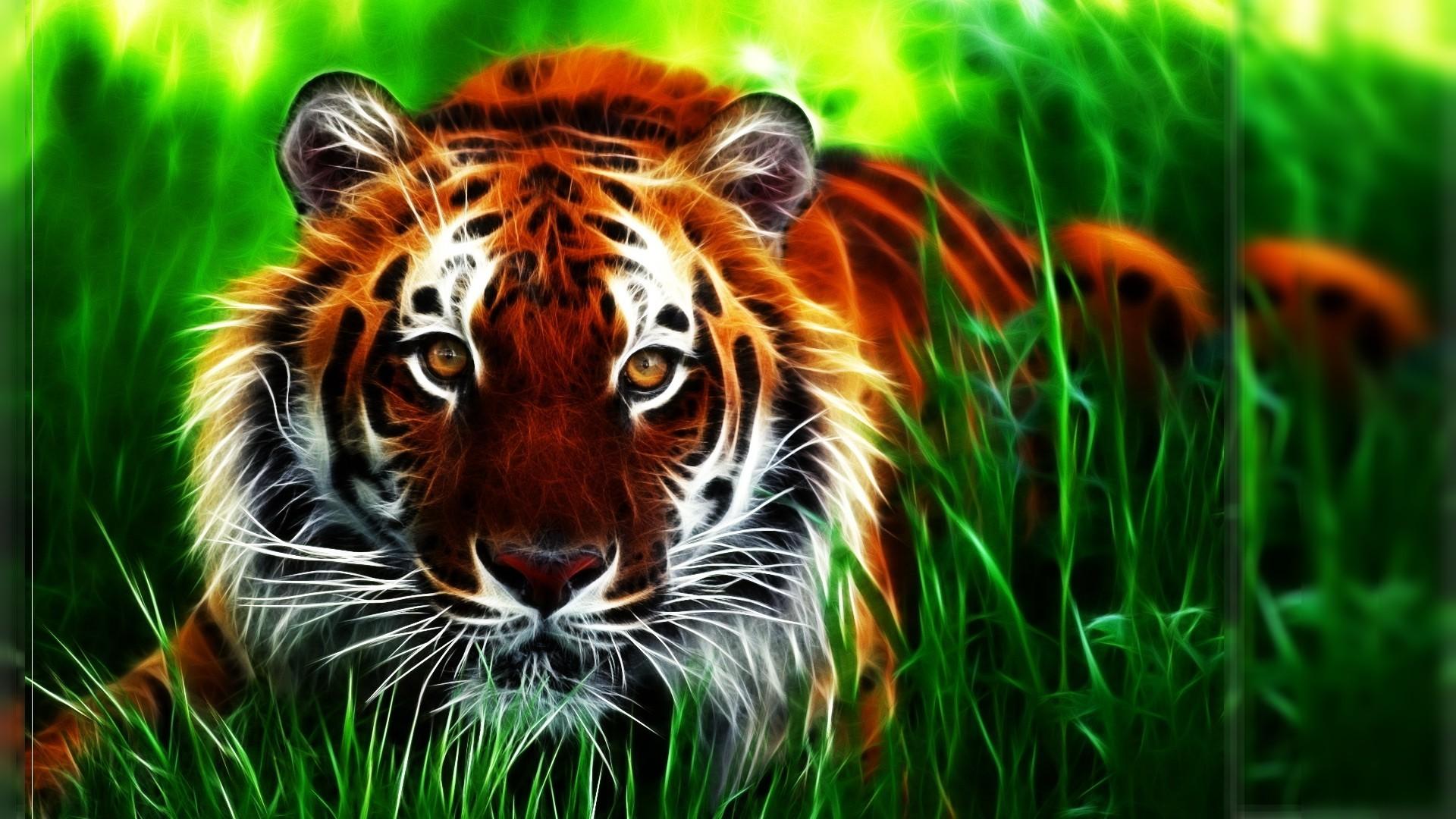 tiger hd wallpaper (81+ images)
