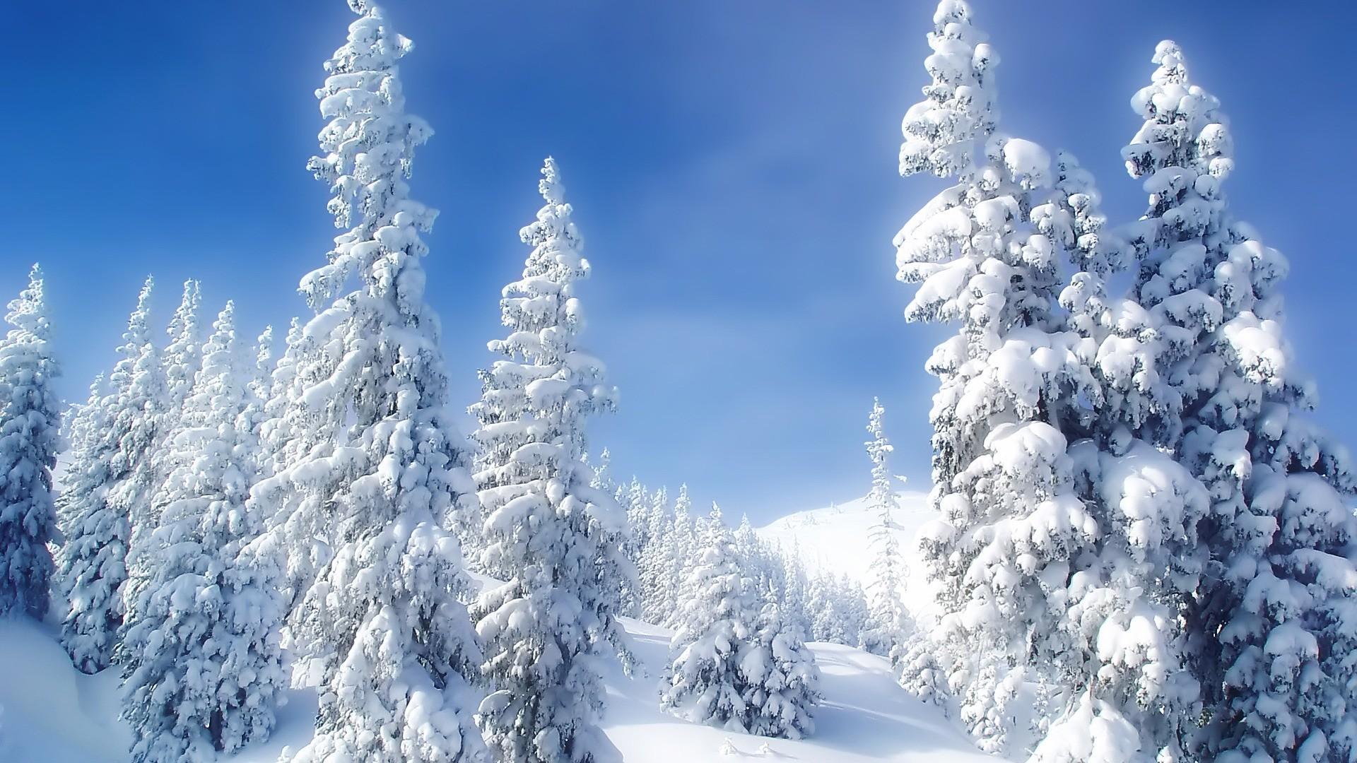 Winter Wonderland Backgrounds (41+ images)