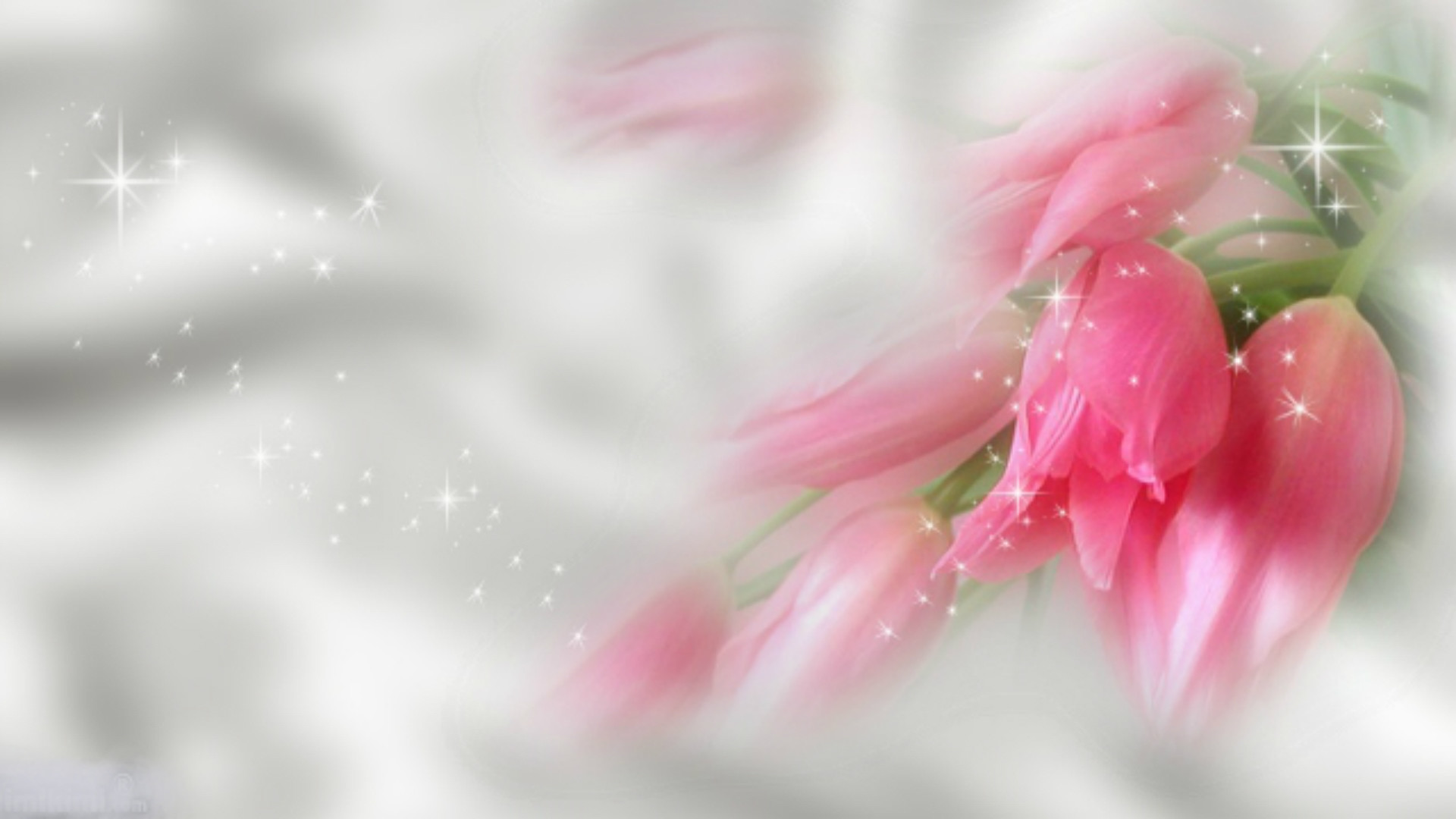 hd wallpaper pink flowers (72+ images)