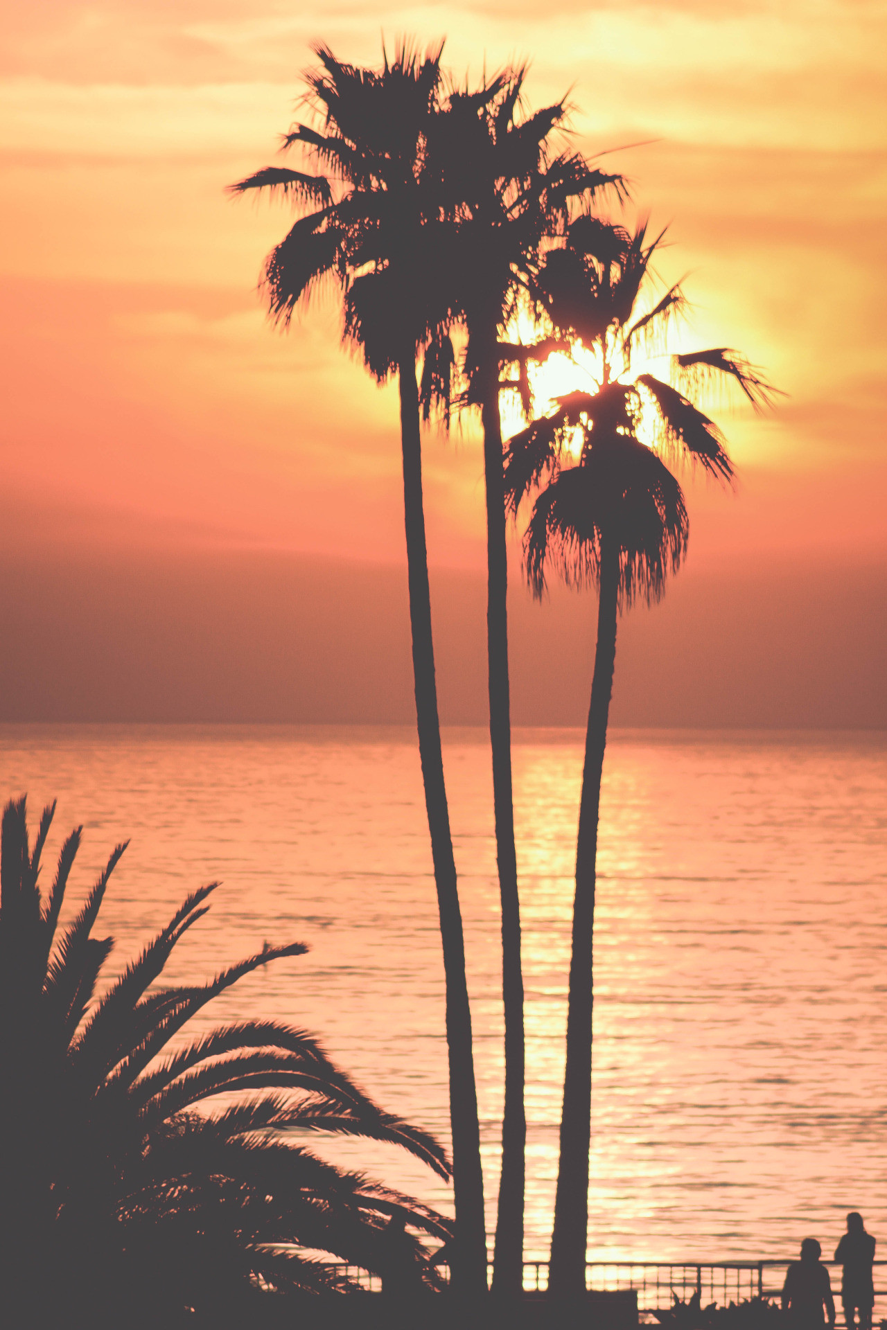Palm Tree iPhone Wallpaper (67+ images)