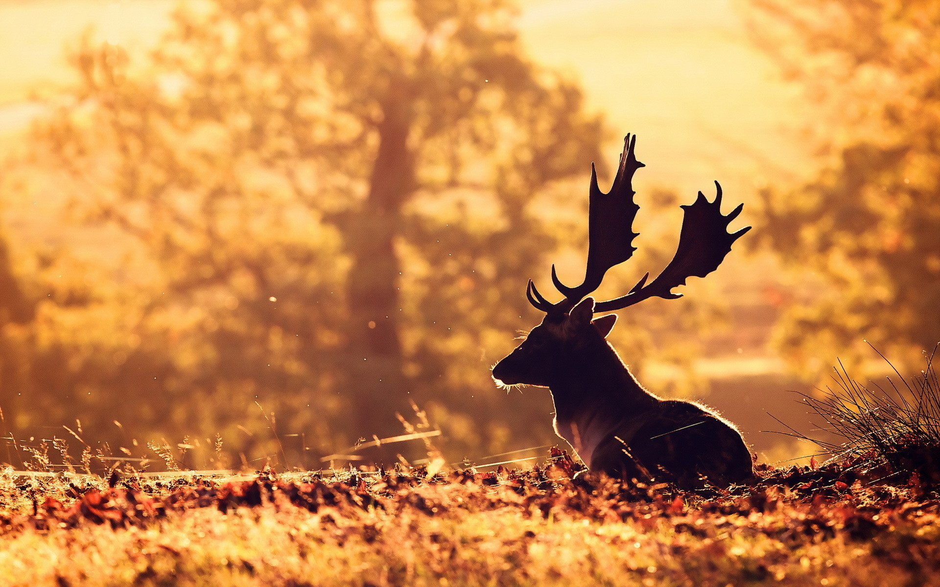 Deer Wallpaper 71 Images