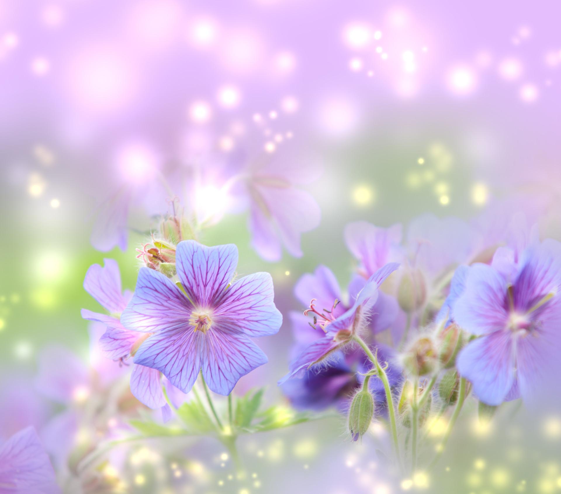 Spring desktop wallpapers backgrounds 65 images 2560x1600 spring flowers wallpaper images wallpapers mightylinksfo