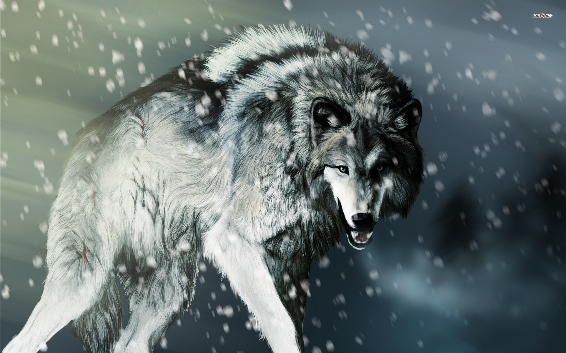 1920x1200  Wolf Wallpapers