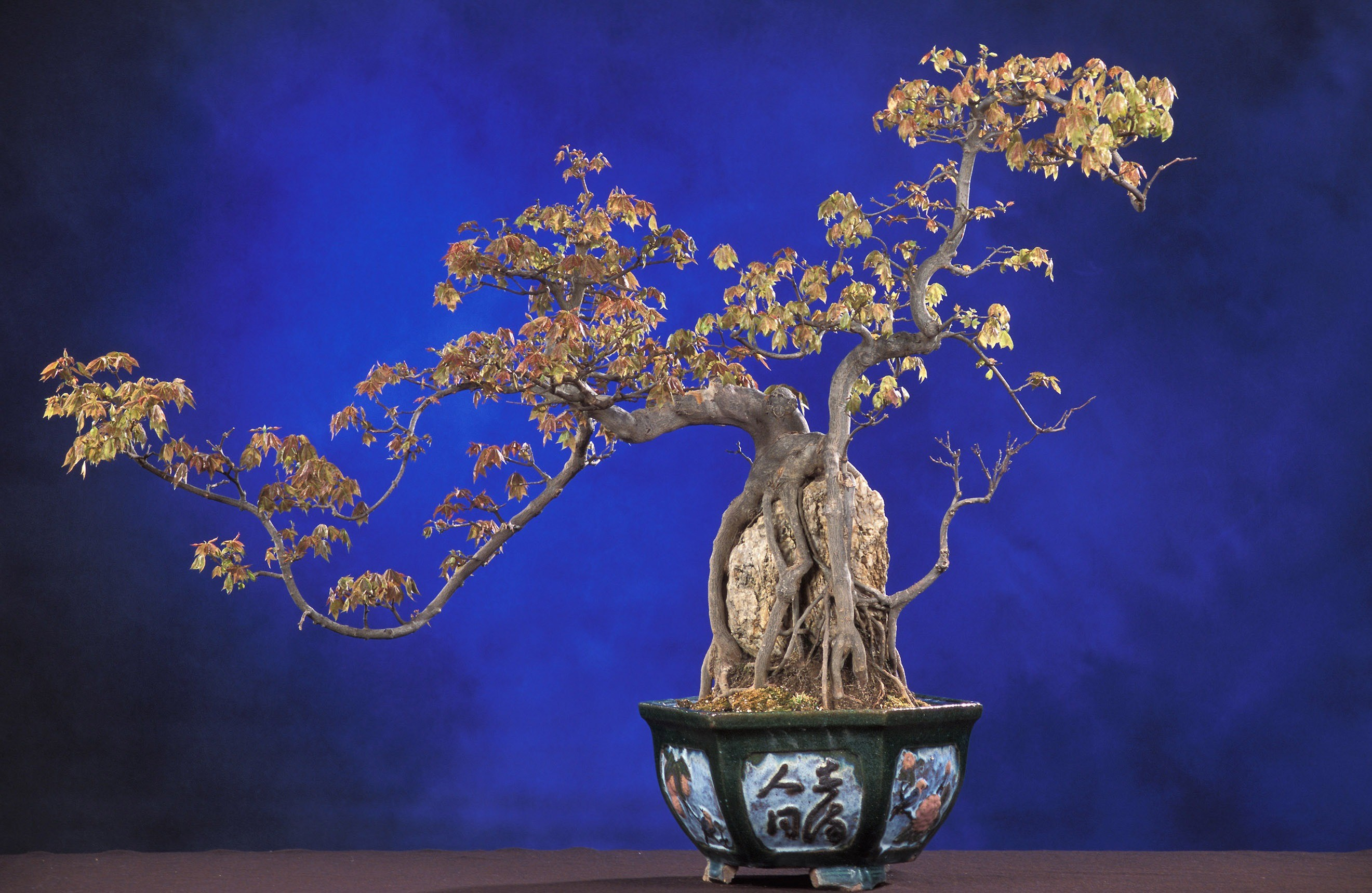 2641x1719 tree branch plant flower blue flora still life potted plant painting  houseplant art bonsai ornamental plant