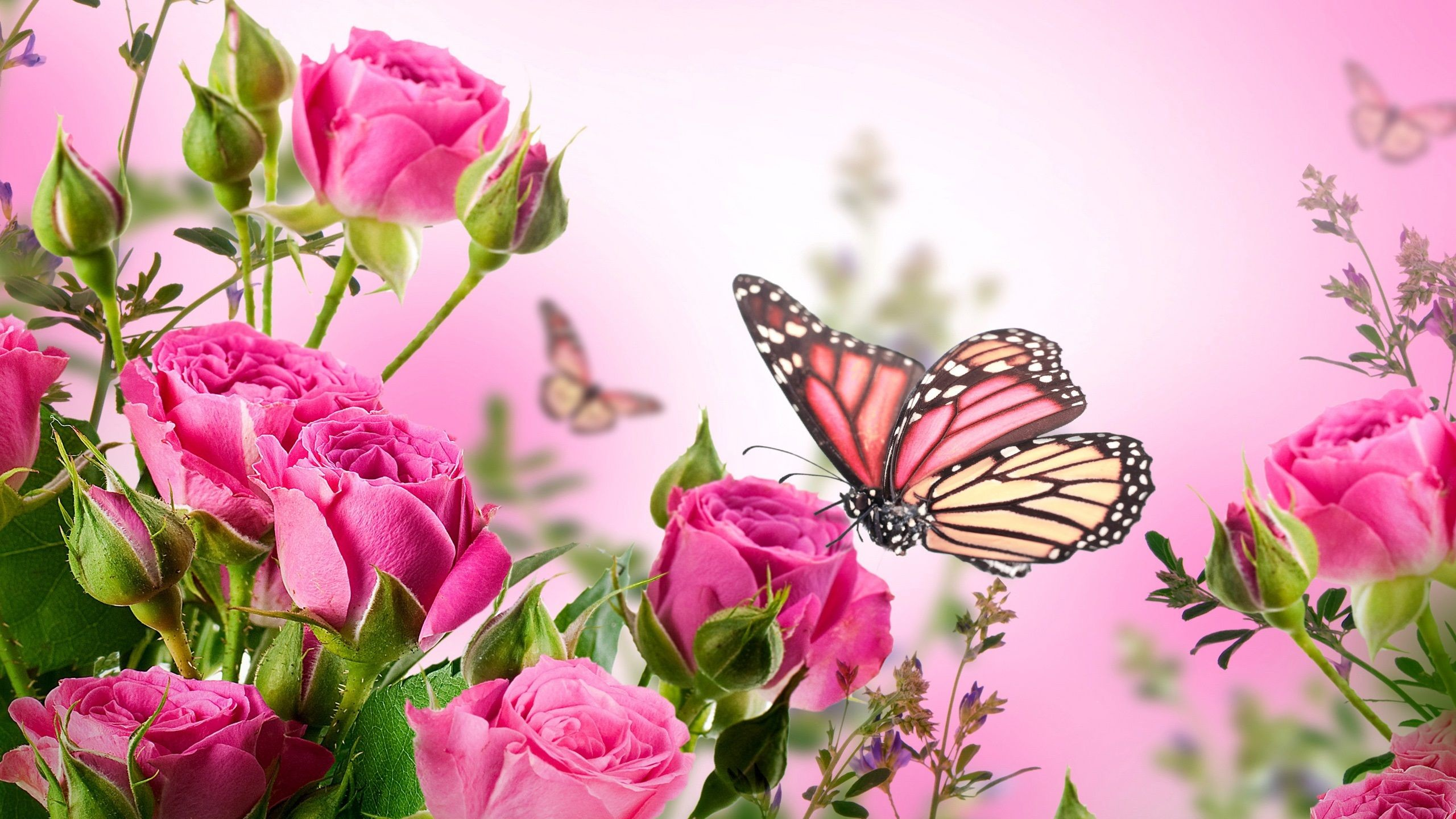 Purple Butterfly Backgrounds 55 Images