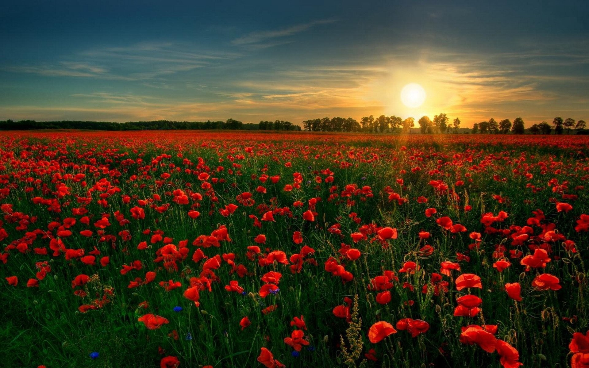 1920x1200 HD Wallpaper | Background Image ID:109552.  Earth Poppy