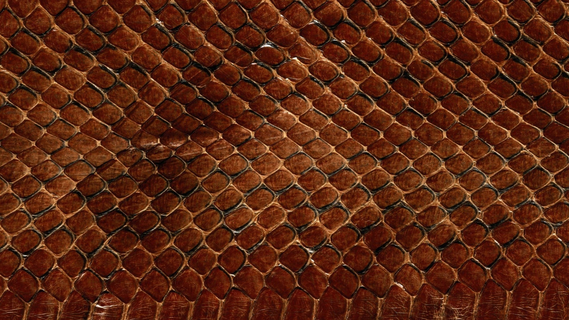 1920x1080 Preview wallpaper texture, leather, snake, scales, background