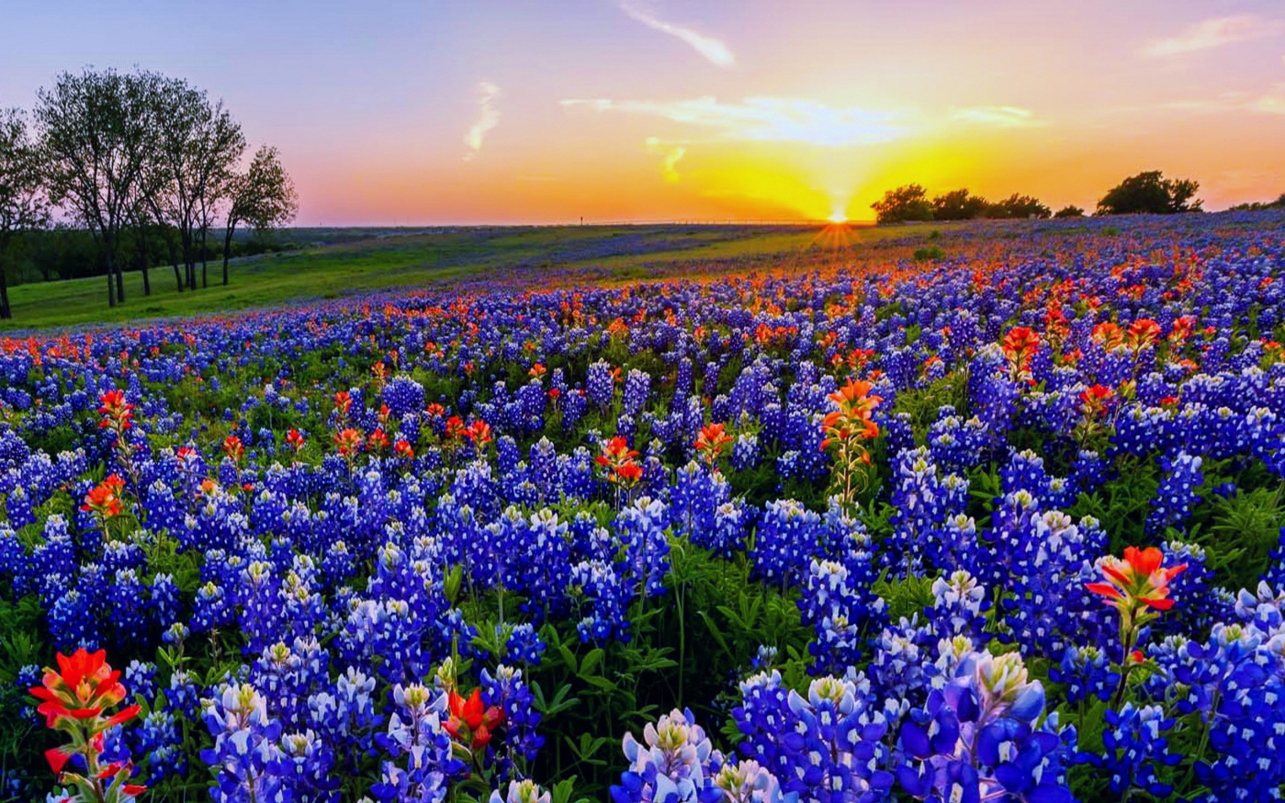 2560x1600 Texas-Backgrounds-wildflowers
