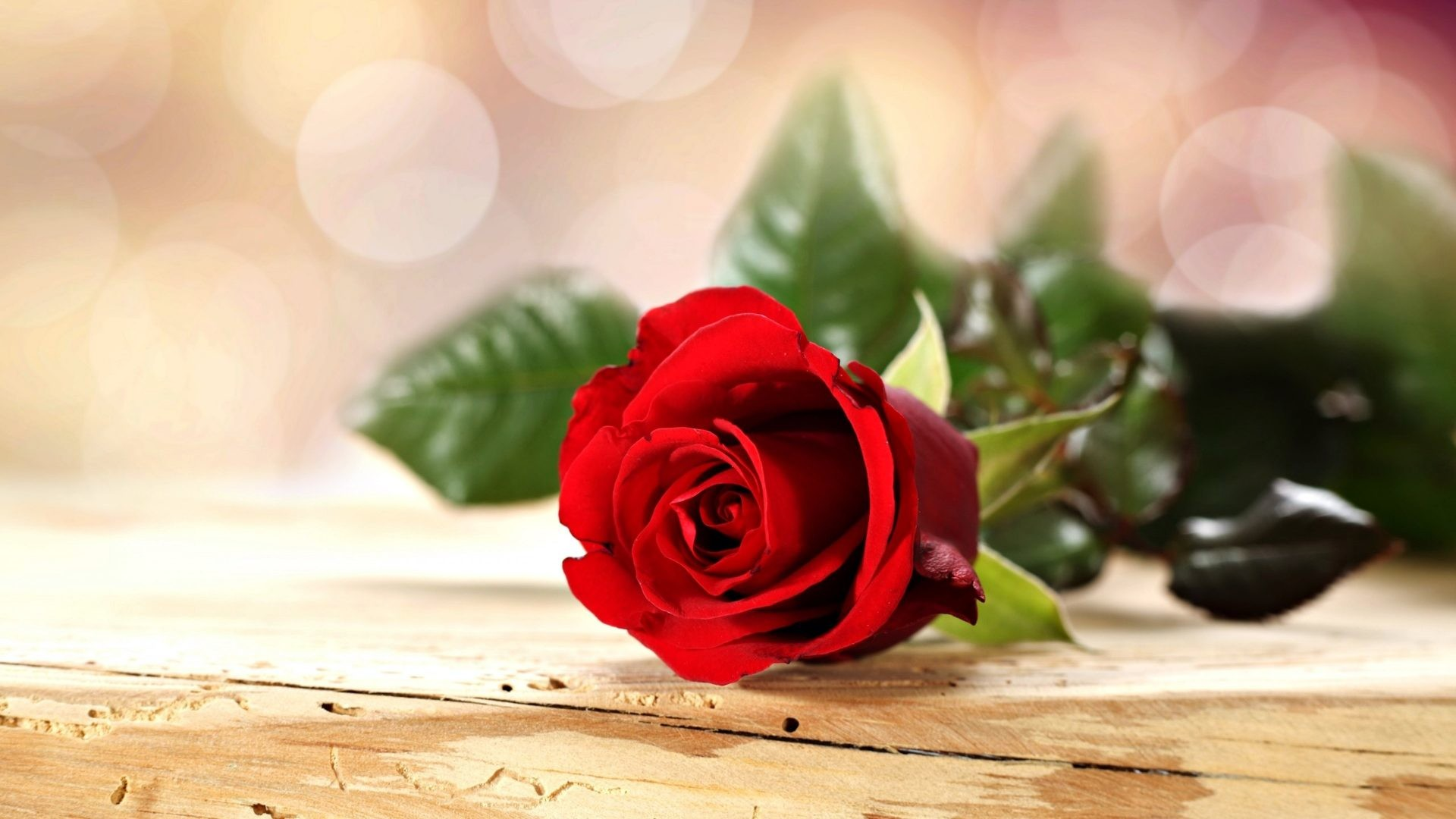 Red Rose Love Wallpaper 55 Images