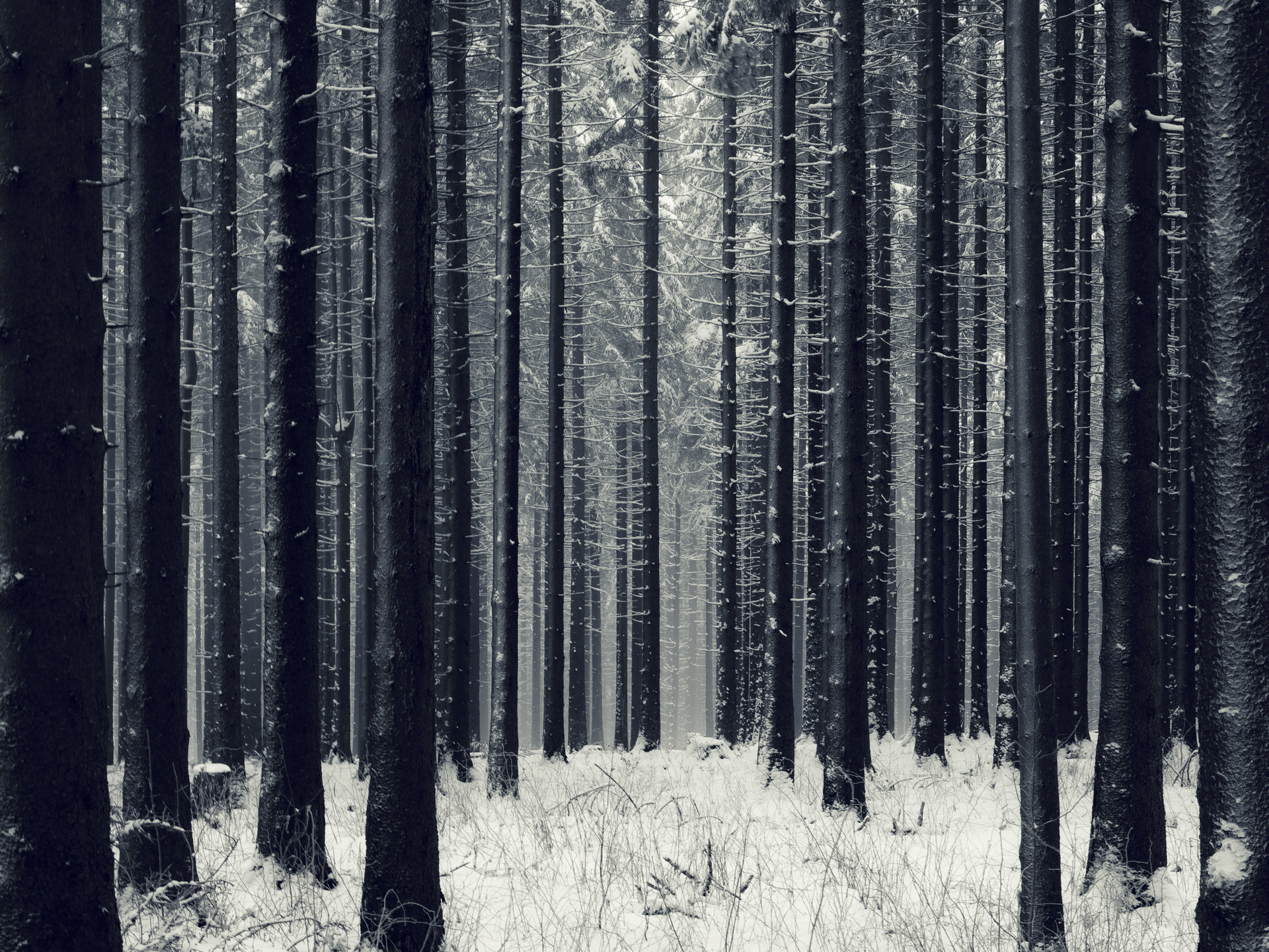 1920x1440 Download Dark Woods Wallpaper Free.