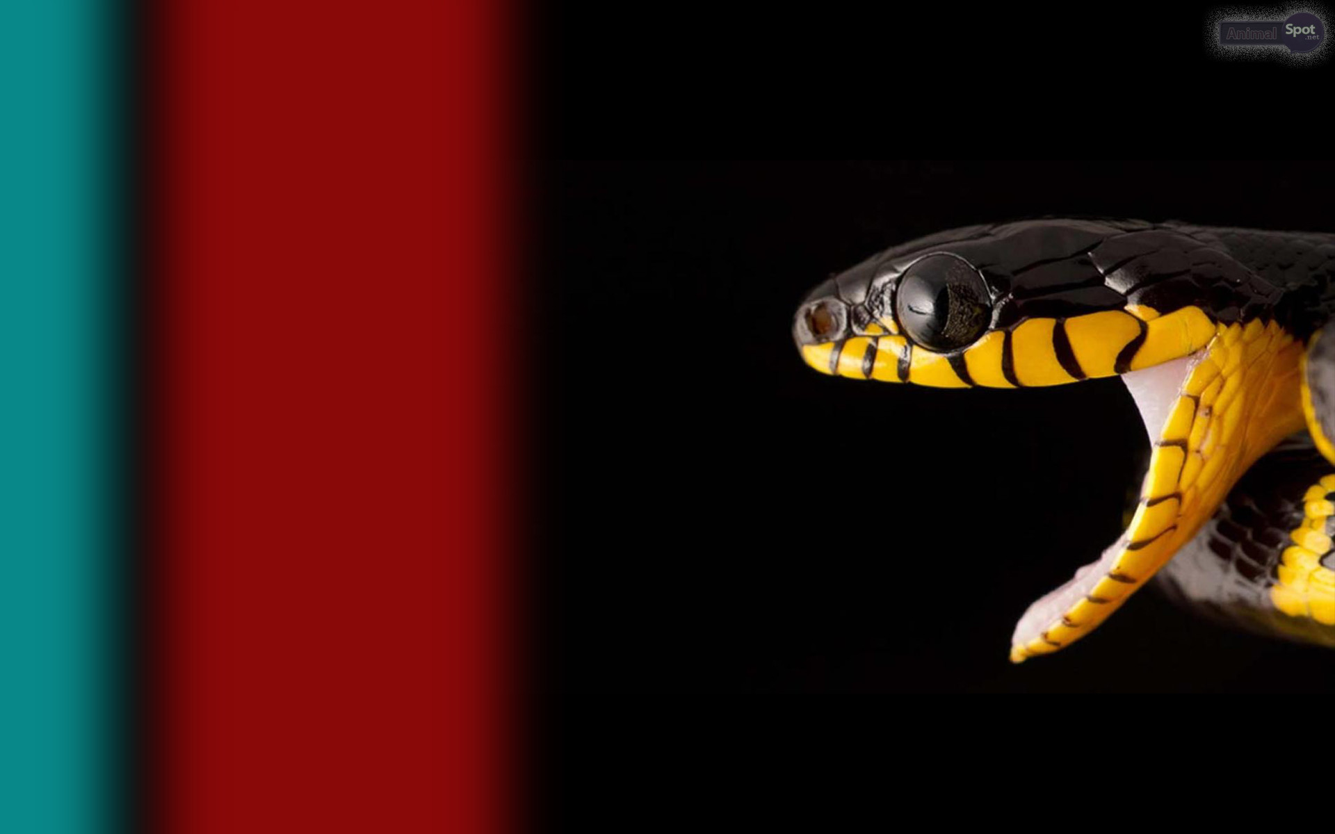 1920x1200 Best Snake Wallpapers And Backgrounds