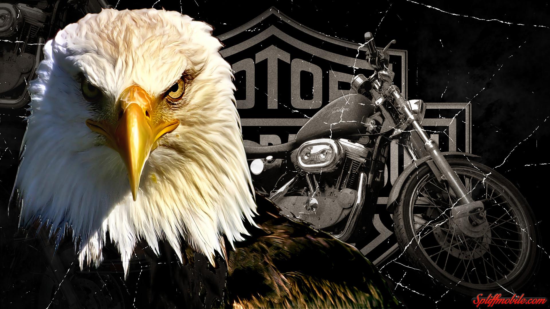 Imagenes De Motos Harley: Harley Davidson Wallpapers And Screensavers (80+ Images