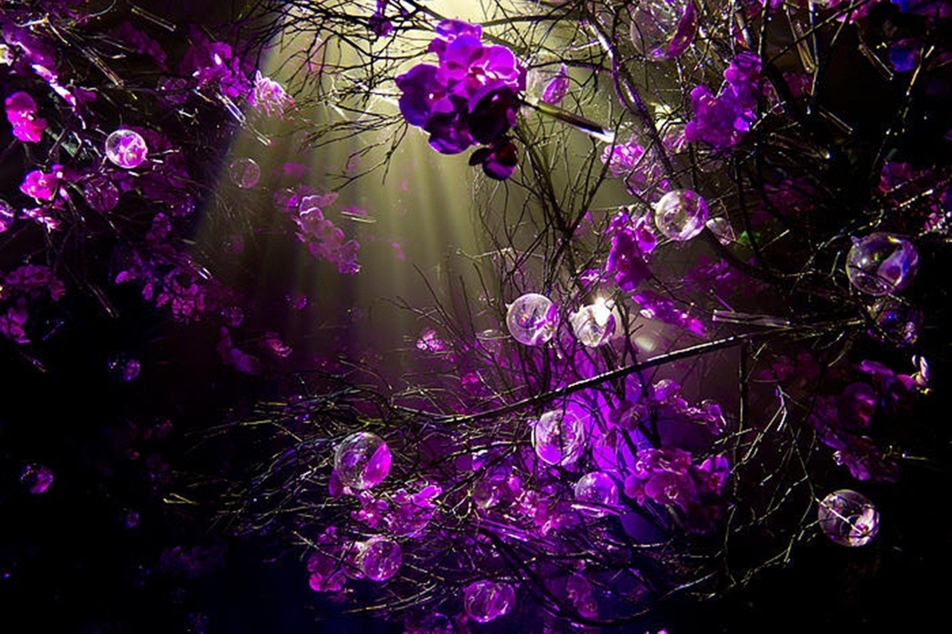 Purple Wallpapers 12 Best Wallpapers Collection Desktop: Purple Desktop Wallpaper (60+ Images