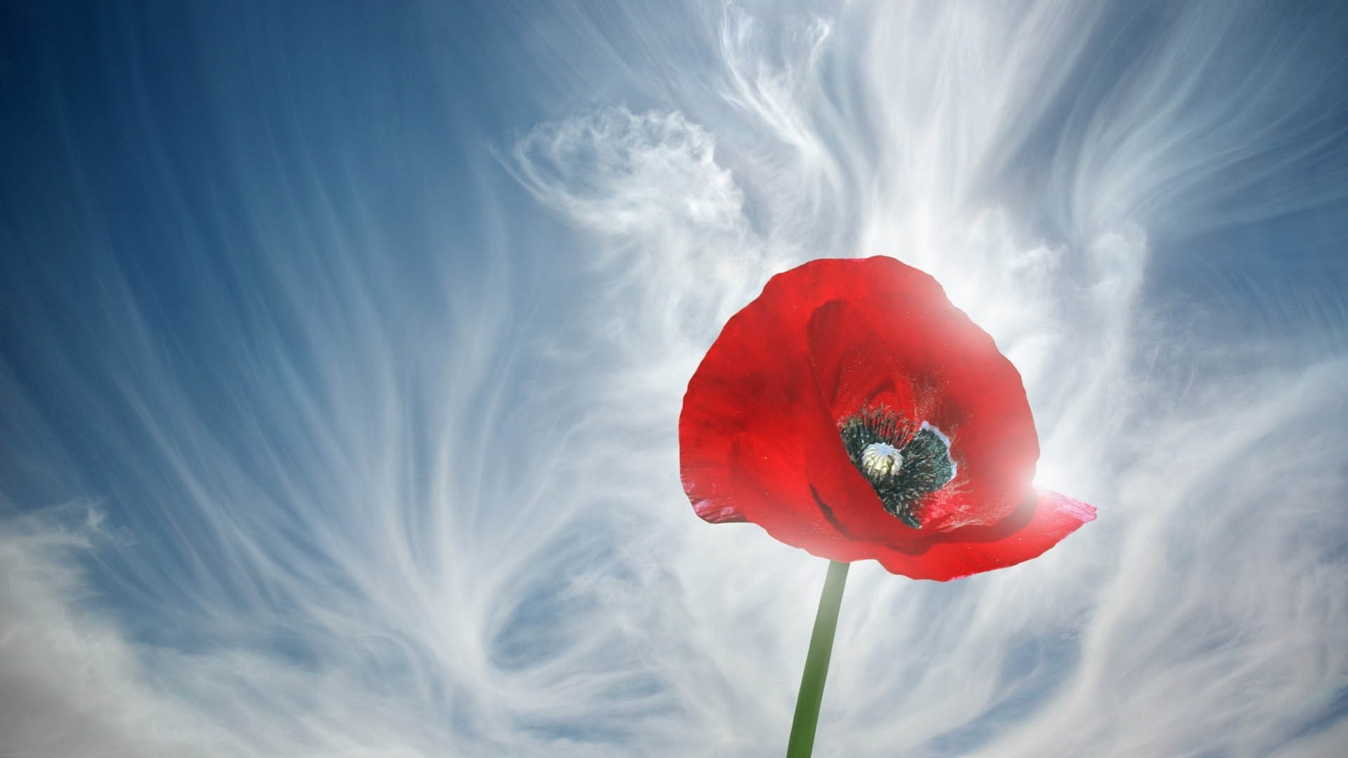 1920x1080 Poppy Smoke Stem Bud - Free Stock Photos, Images, HD Wallpaper