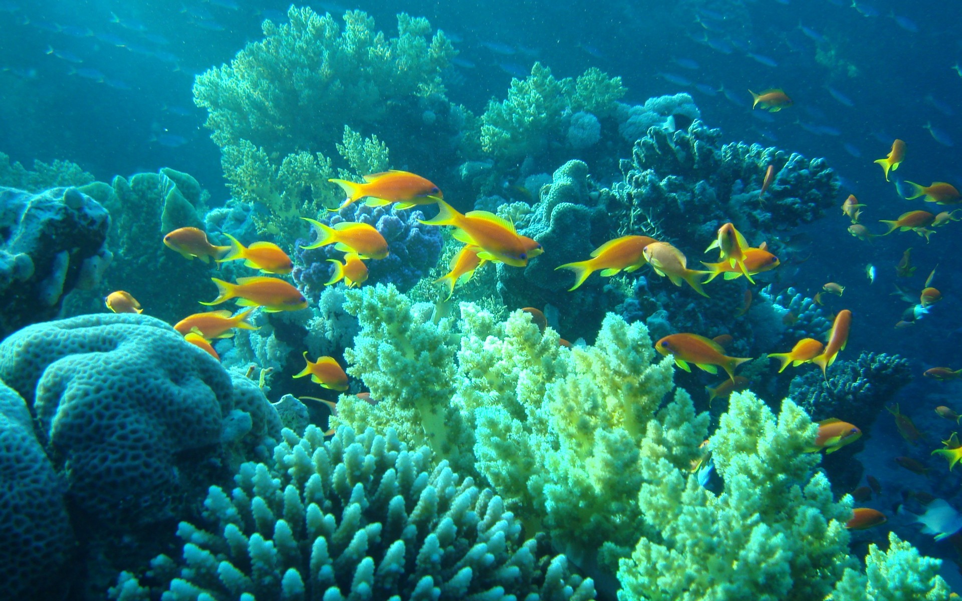 1920x1200 tropical fishes | underwater Egypt sea ocean fishes coral tropical wallpaper  background