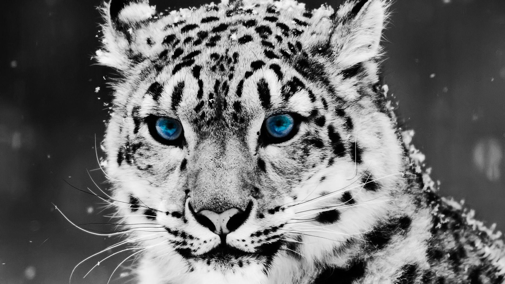 white tiger backgrounds (56+ images)