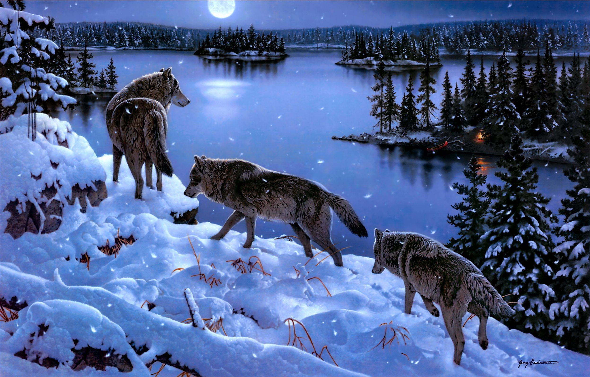 2496x1595 animal wolf wallpaper download hd images background images mac desktop  wallpapers free 4k hd pictures 2496×1595 Wallpaper HD