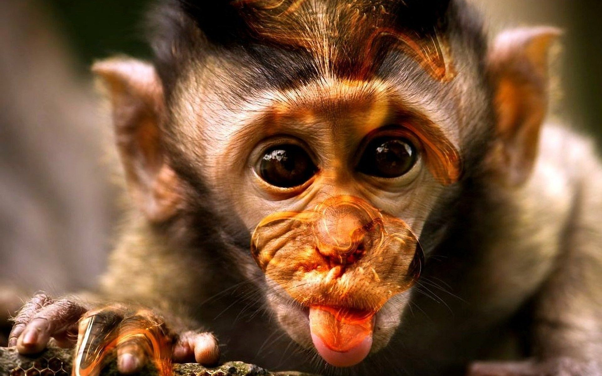 1920x1200 Monkey HD Wallpapers