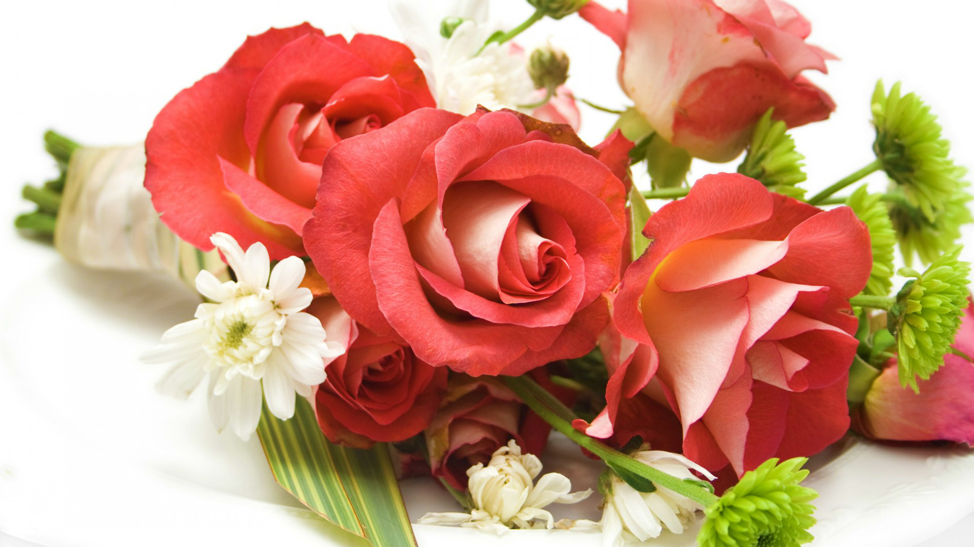 Beautiful Rose Wallpapers Hd 62 Images