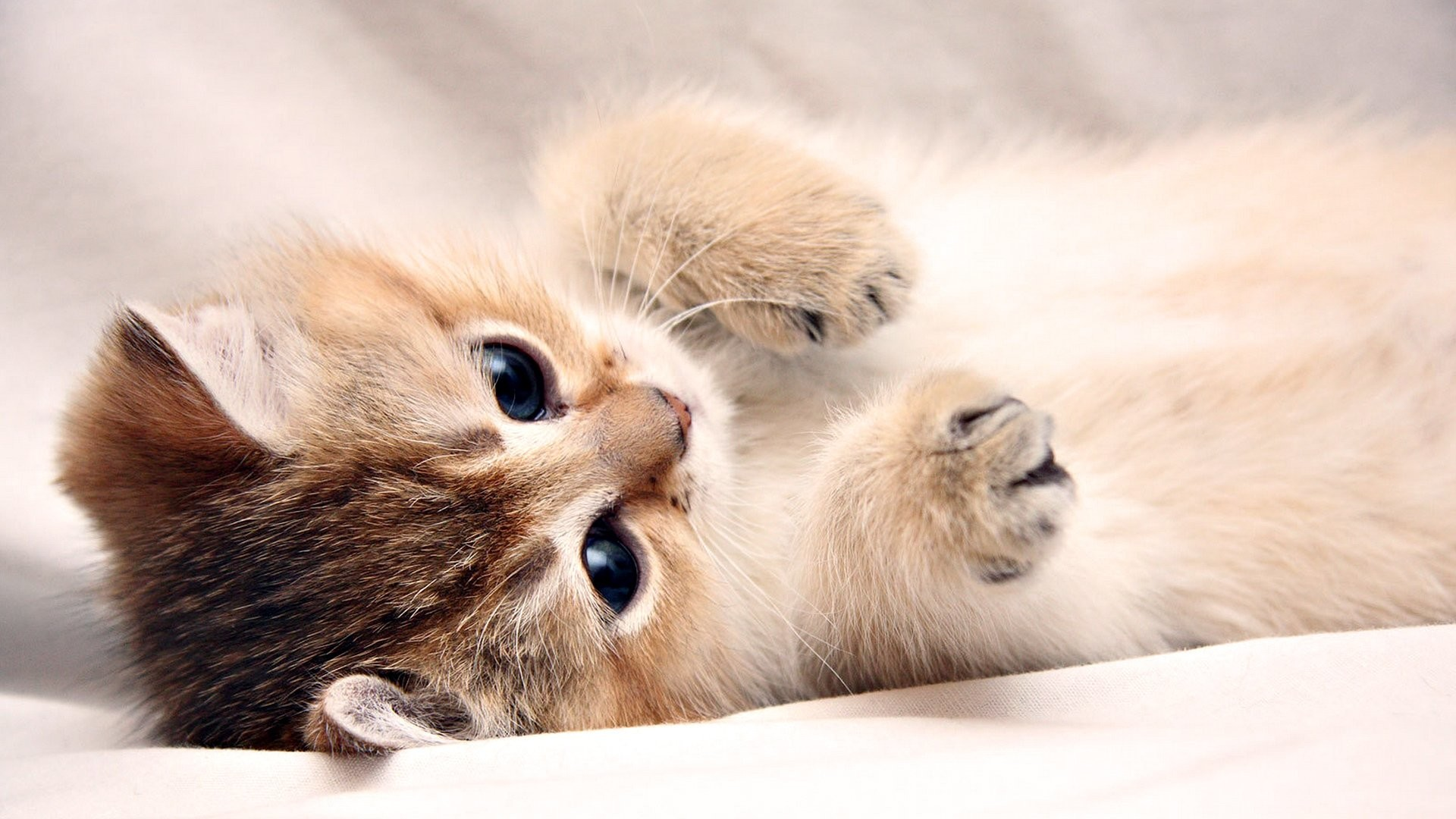 1920x1080 Cute Cat and Kitten HD wallpaper 1280×800 Cute Kitten Pictures Wallpapers  (44 Wallpapers