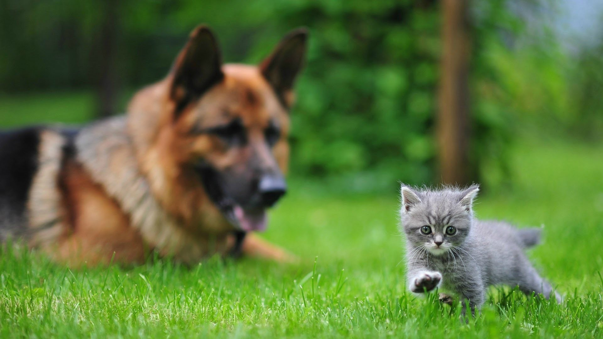 Wallpaper crazy cats and dogs 57 images - Animal 1920x1080 ...