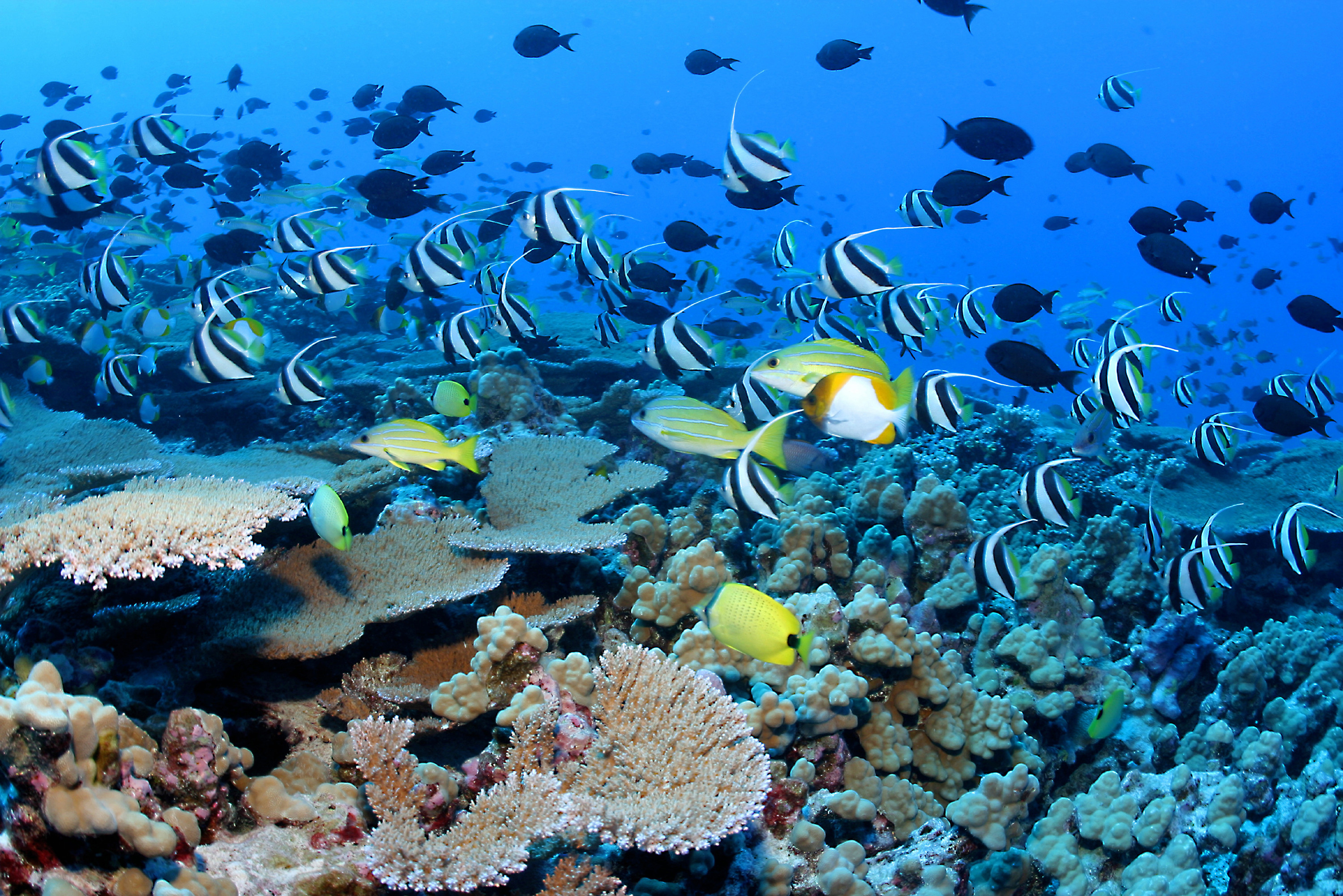 3000x2001 Coral Reef Fishes Wallpaper HD wallpapers - Coral Reef Fishes Wallpaper
