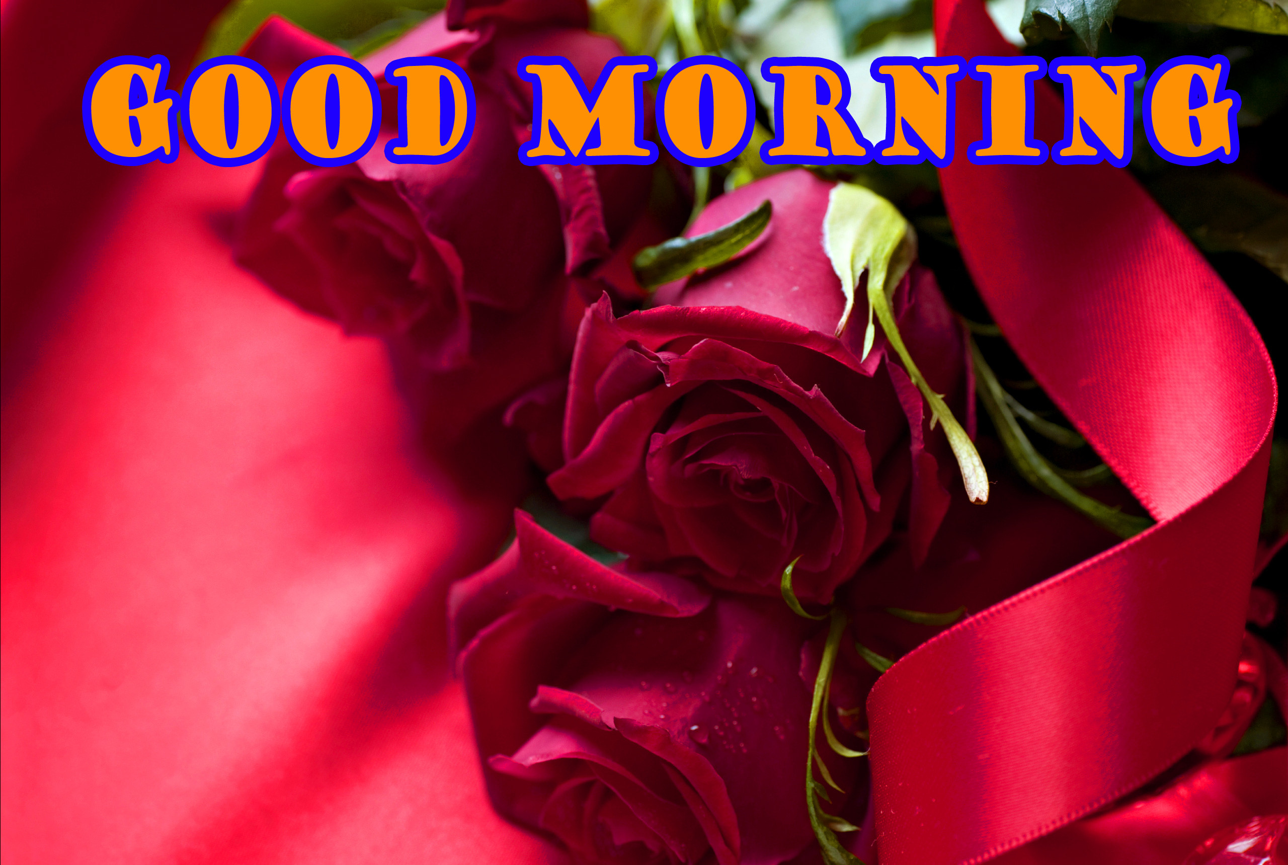 2560x1719 Good Morning Red Rose Wallpaper Pictures Free Download