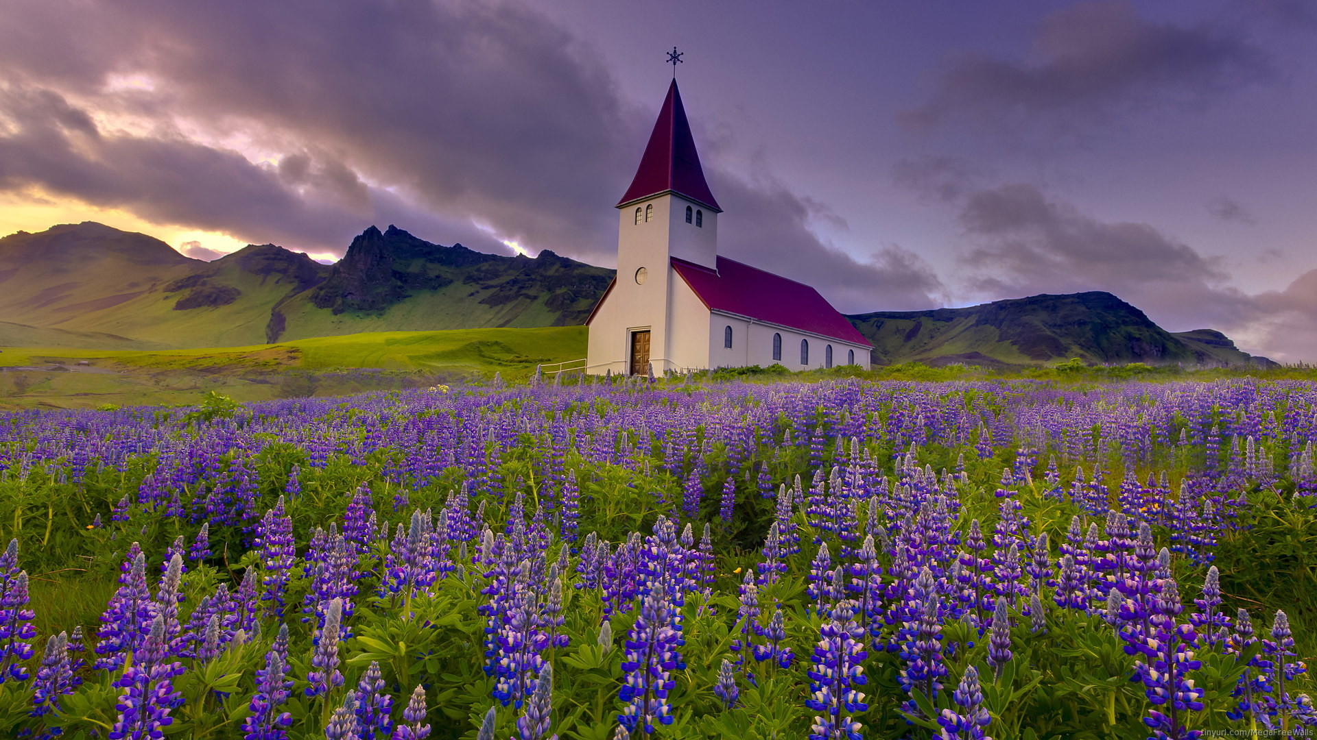 1920x1080 Religious - Church Flower Field Purple Purple Flower Lupine Steeple Chapel  Religious Wallpaper
