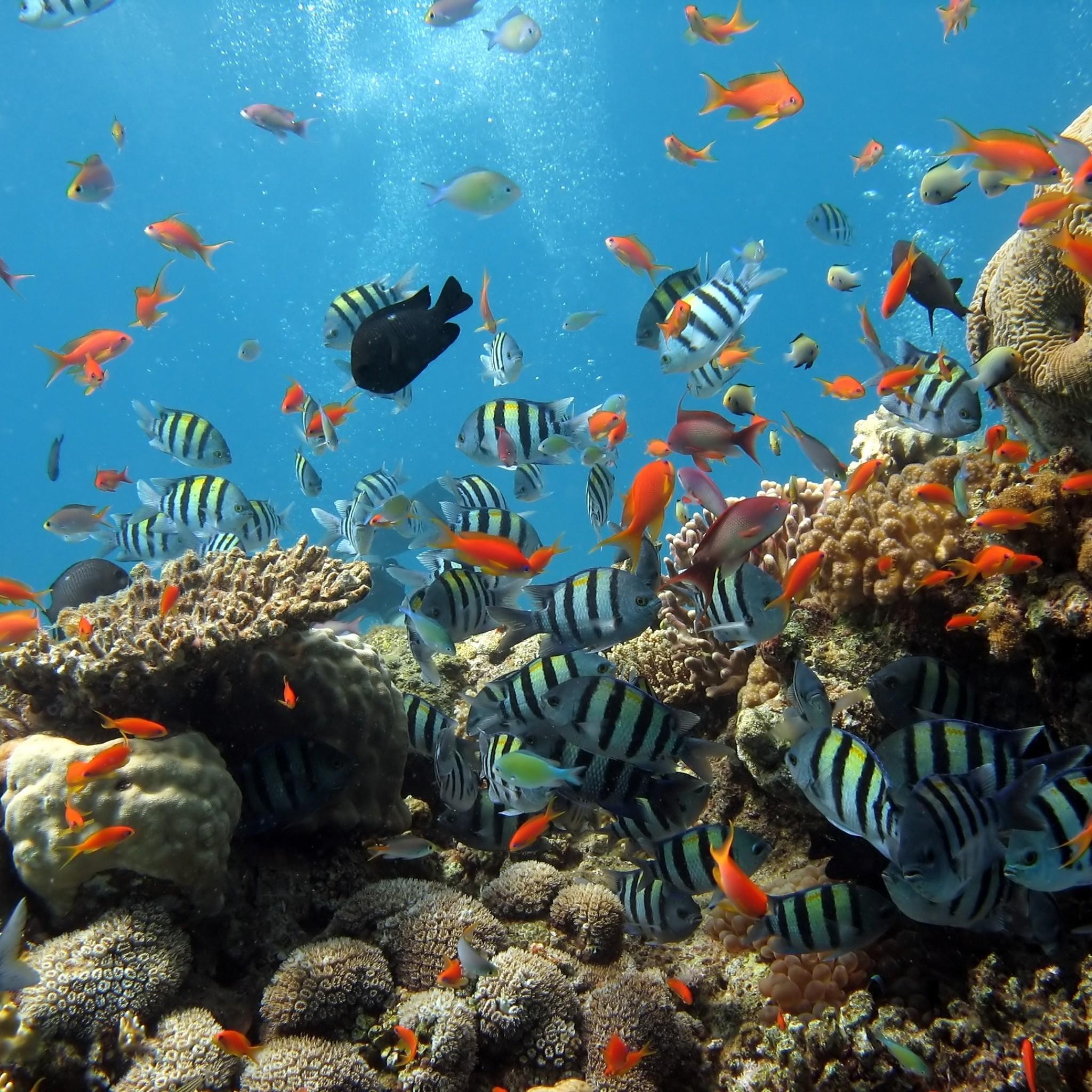 Underwater Ocean Wallpaper 57 Images