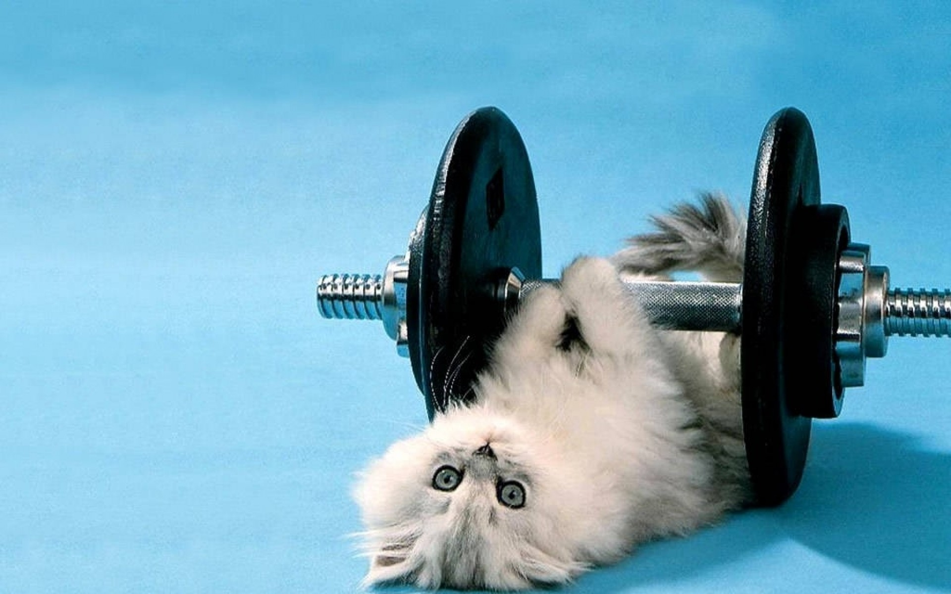 1920x1200 Funny Cat Weight Lifting Wallpaper