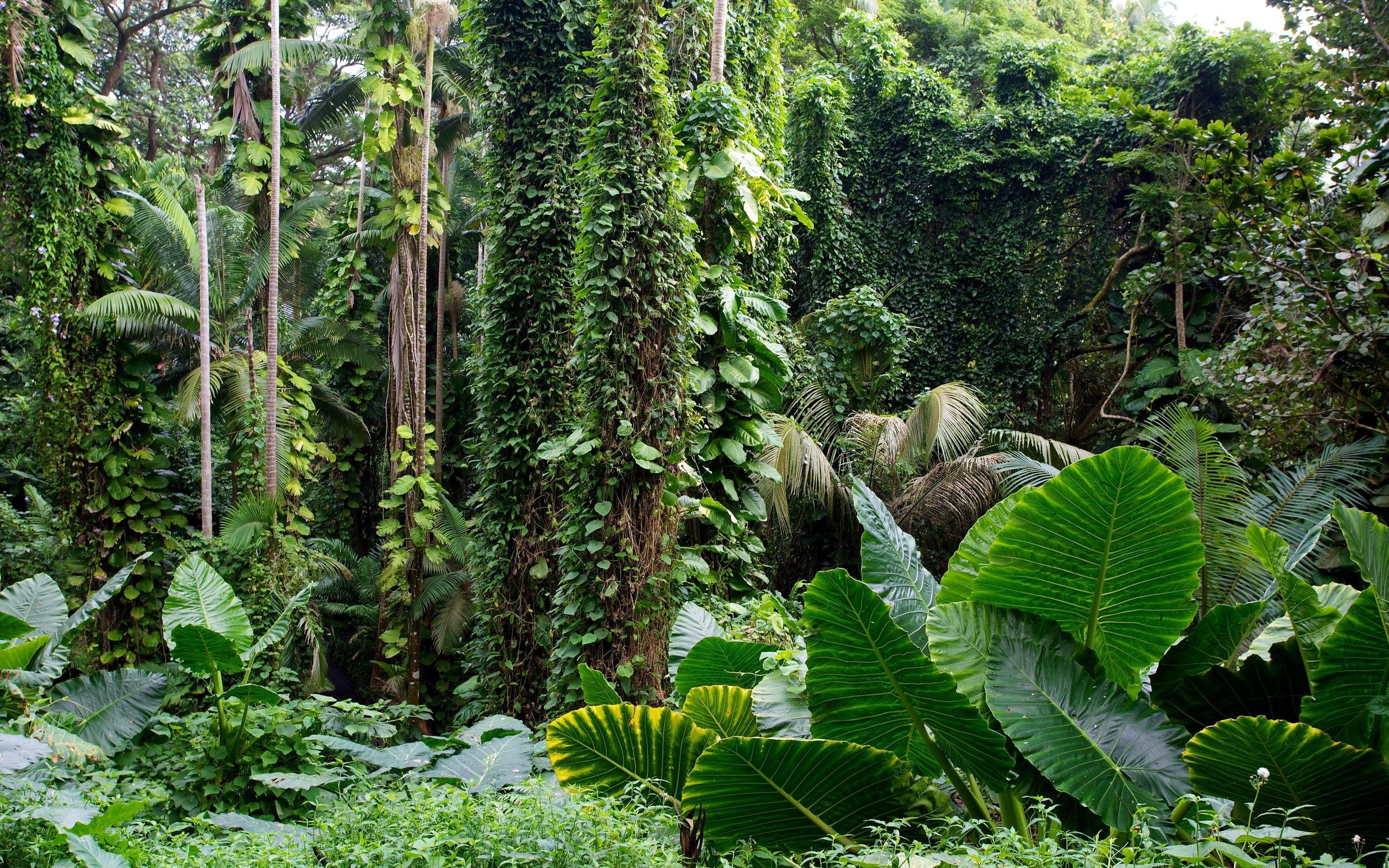 2560x1600 16 Best Photos of Printable Rainforest Backgrounds - Jungle Forest .