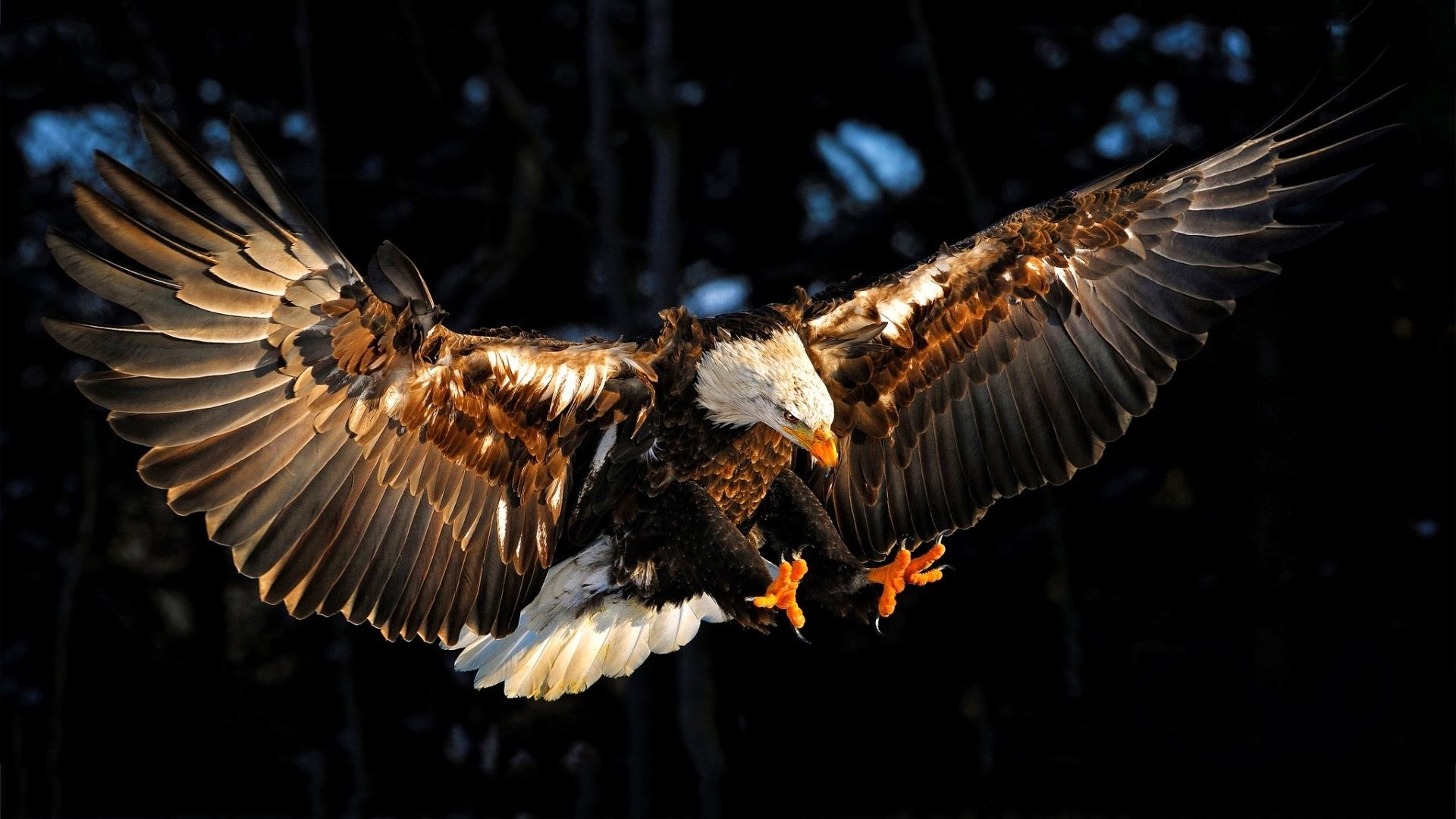 1920x1080 HD Wallpaper | Background ID:647503.  Animal Eagle