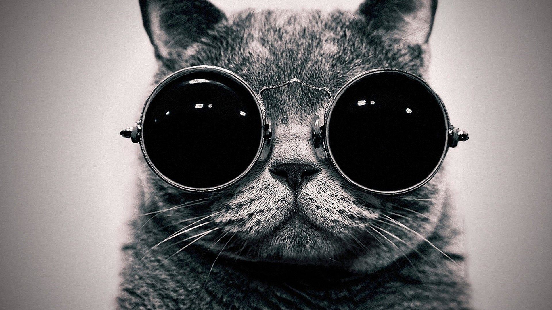 1920x1080 cat glasses black and white mustache
