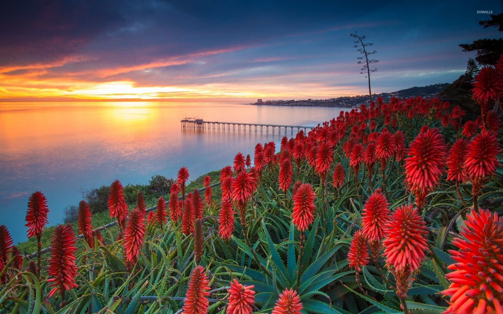 1920x1200 Sunset over exotic flowers wallpaper