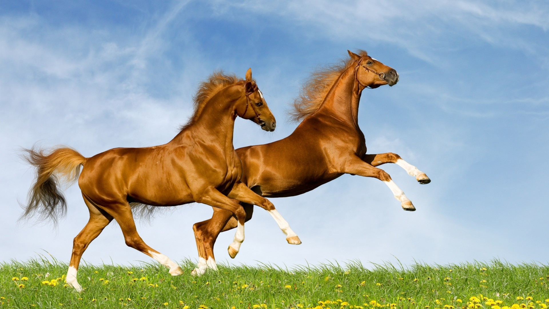 1920x1080 Backgrounds for Gt Wild Horses Running Wallpaper px