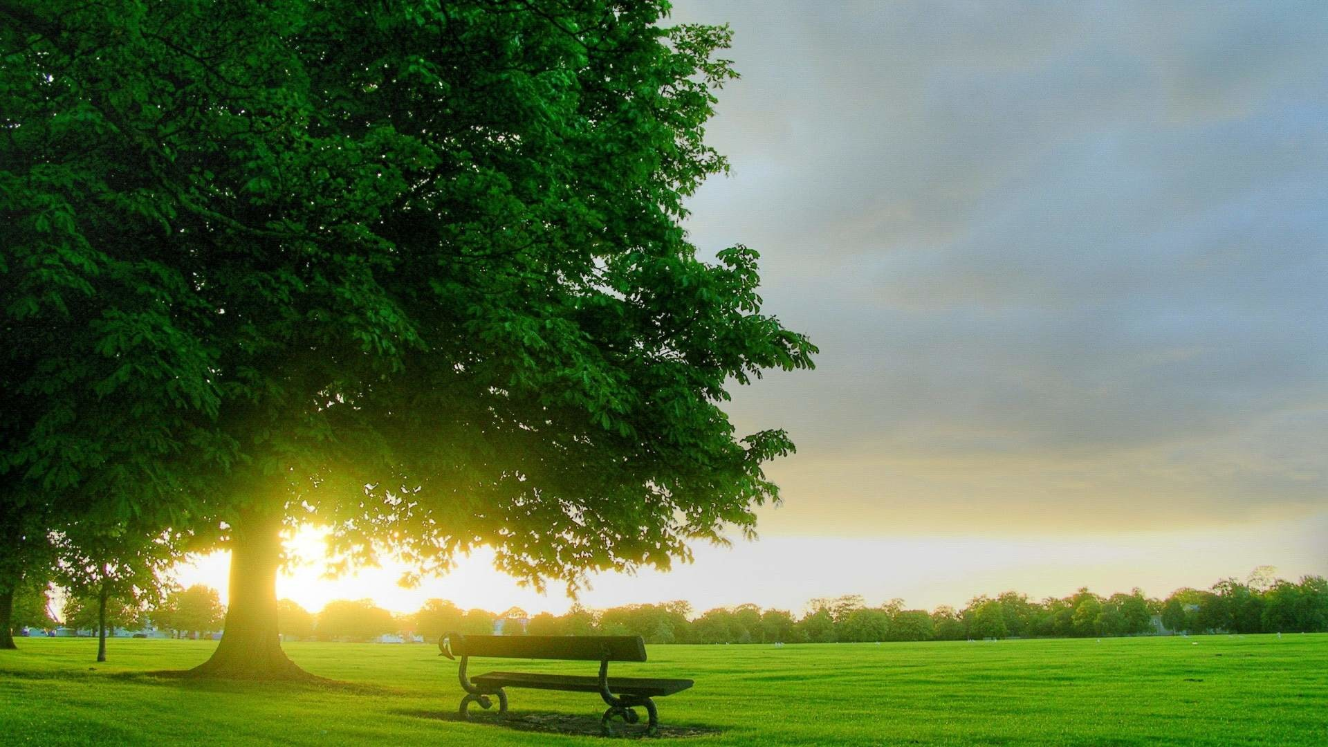 Tree Background Wallpaper (58+ images)
