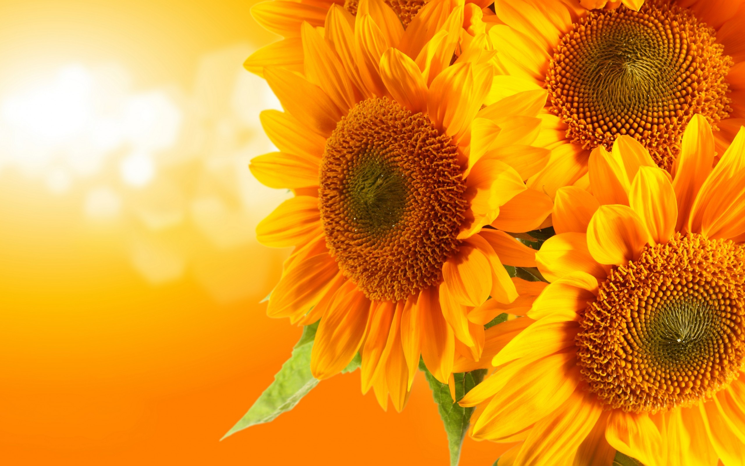 sunflower wallpapers (72+ images)