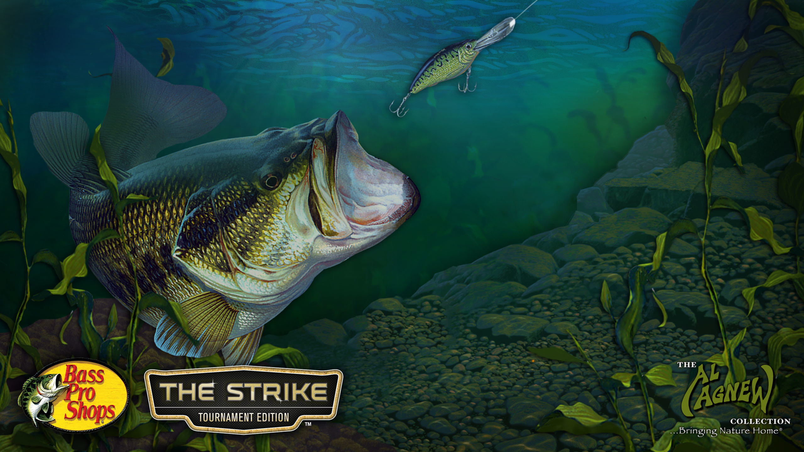 2560x1440 Images For Largemouth Bass Wallpaper Hd