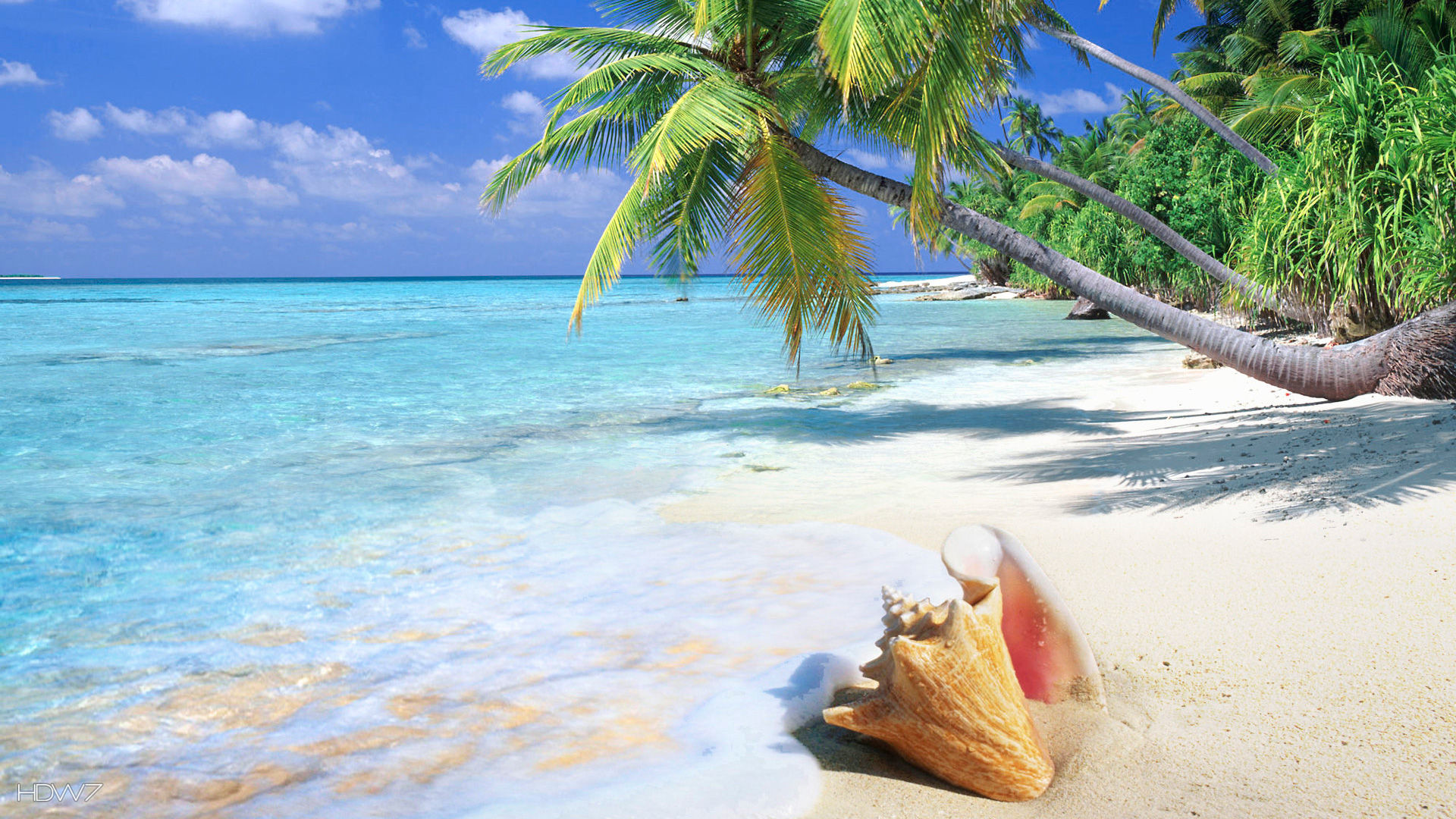 1920x1080 tropical beach shell  | HD WALLPAPERS GALLERY #81