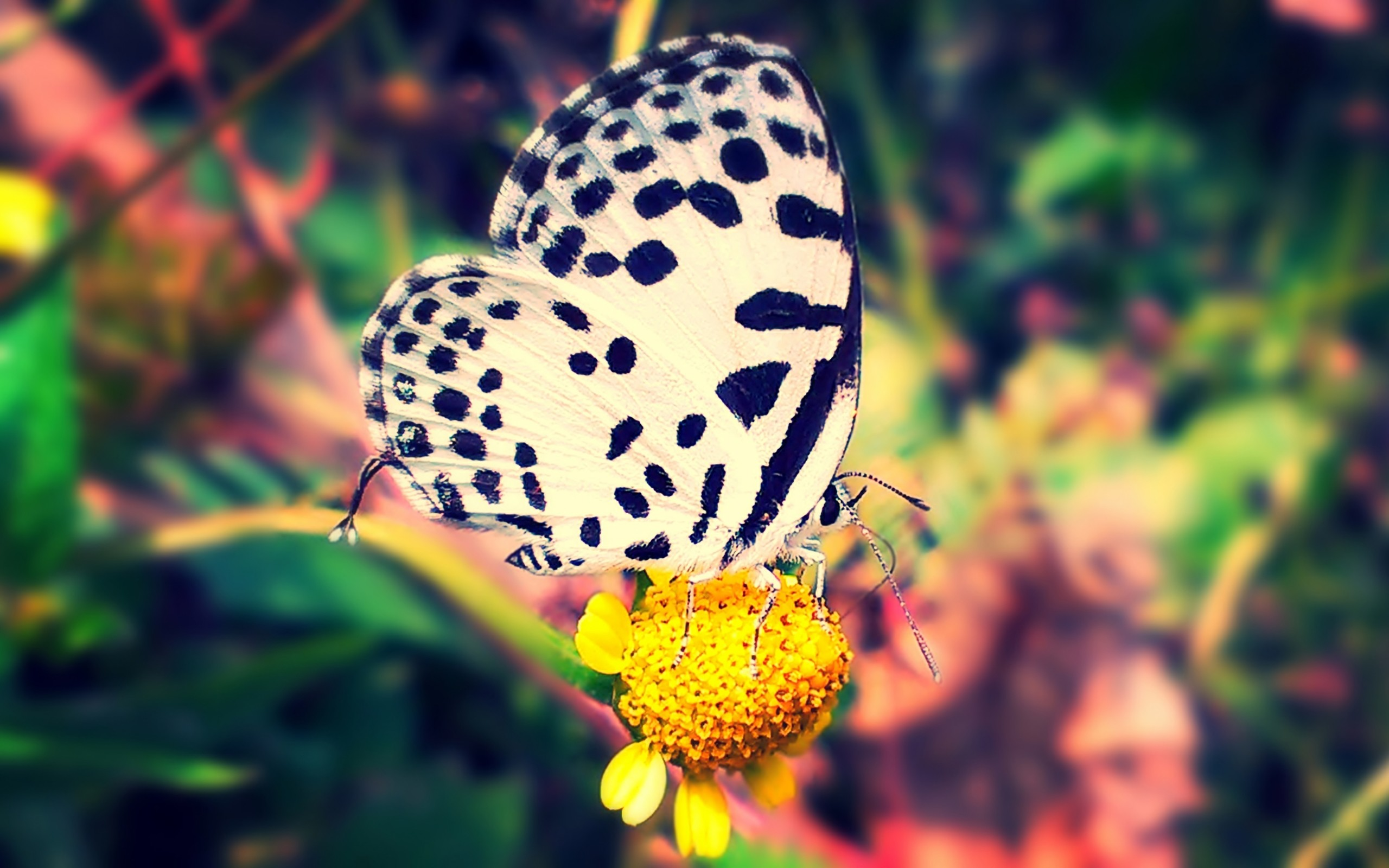 2560x1600 Beautiful Butterfly HD wallpaper