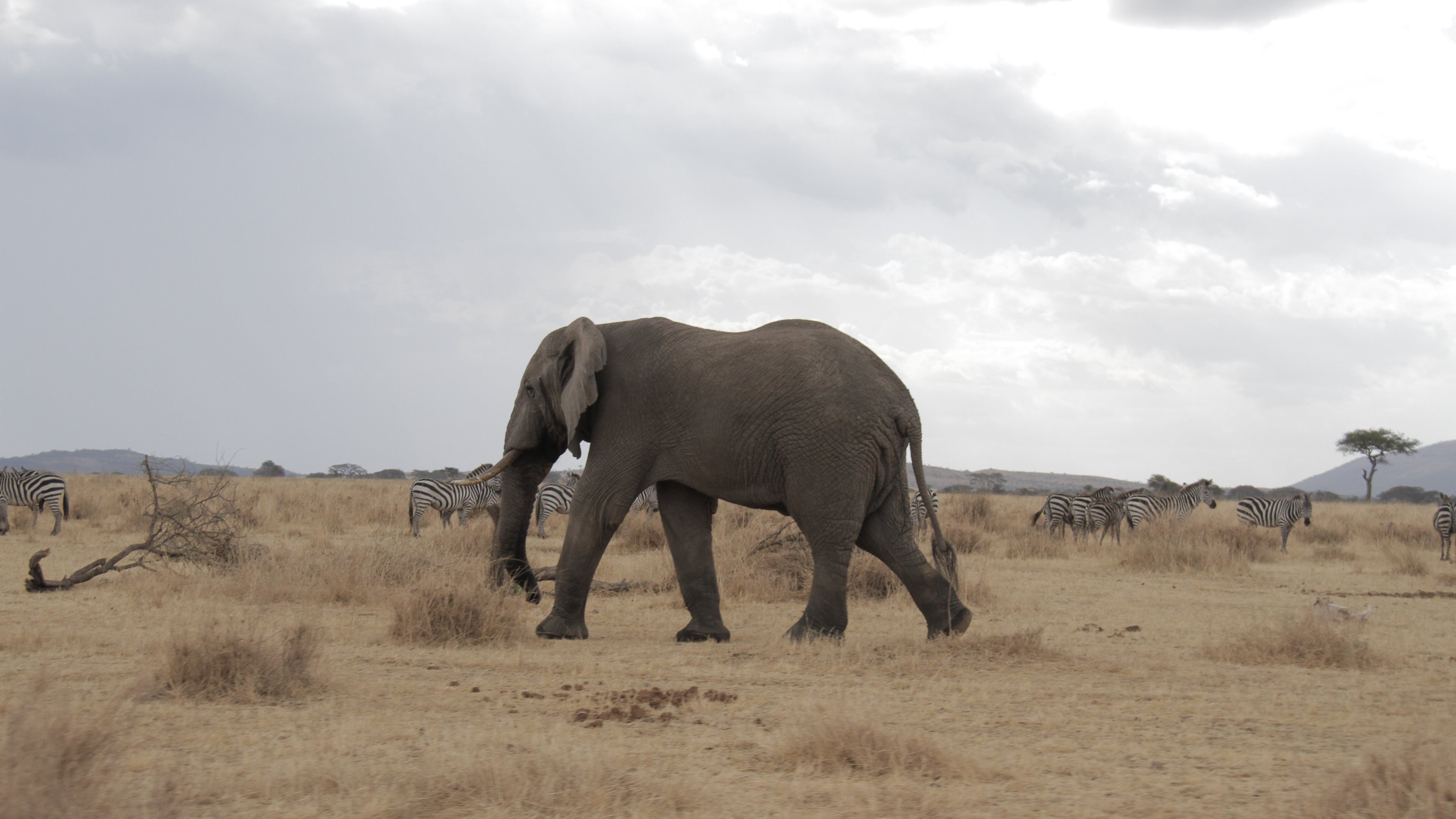 Elephant Wallpaper (73+ images)